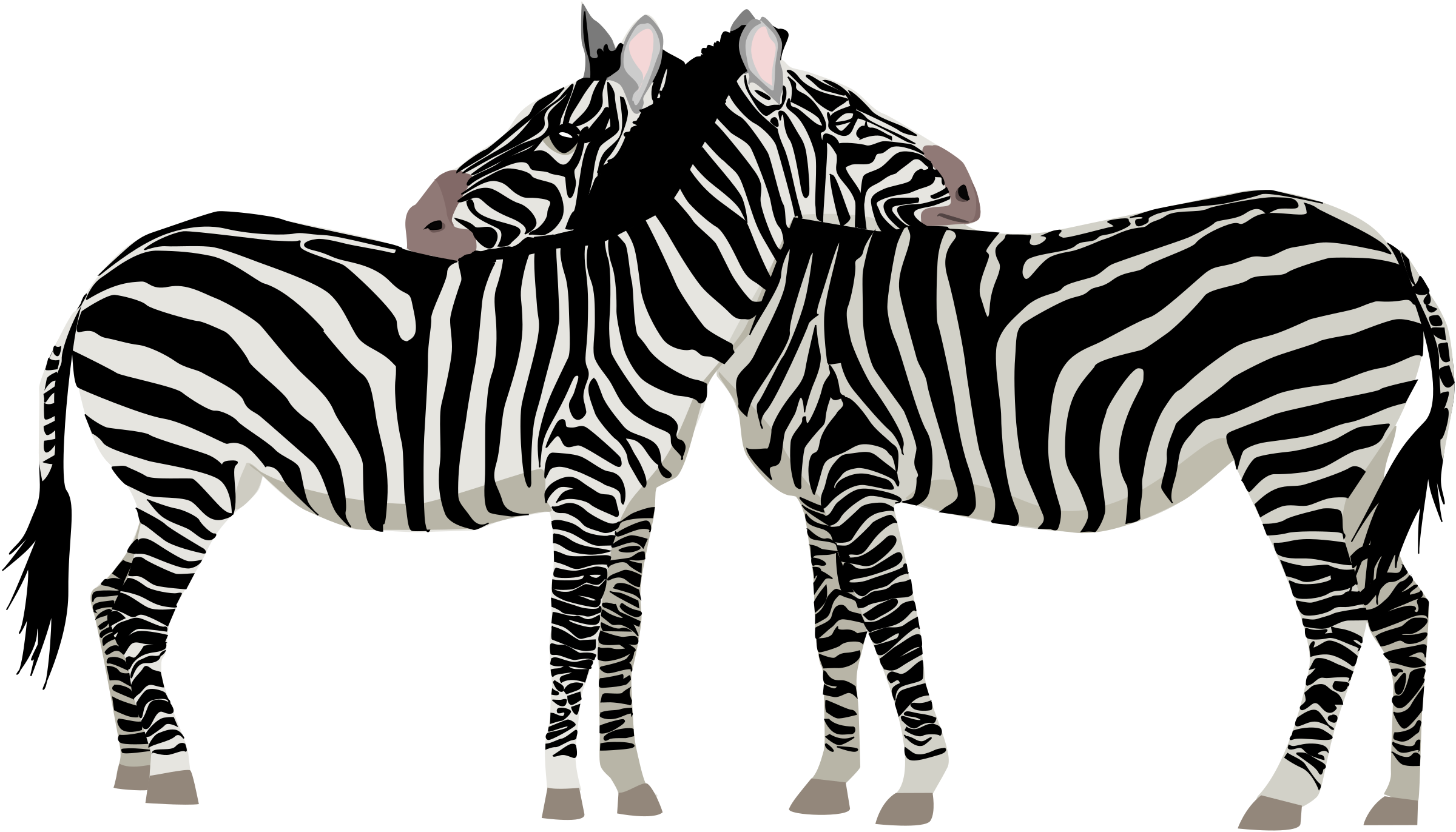 Zebras by ha1flosse