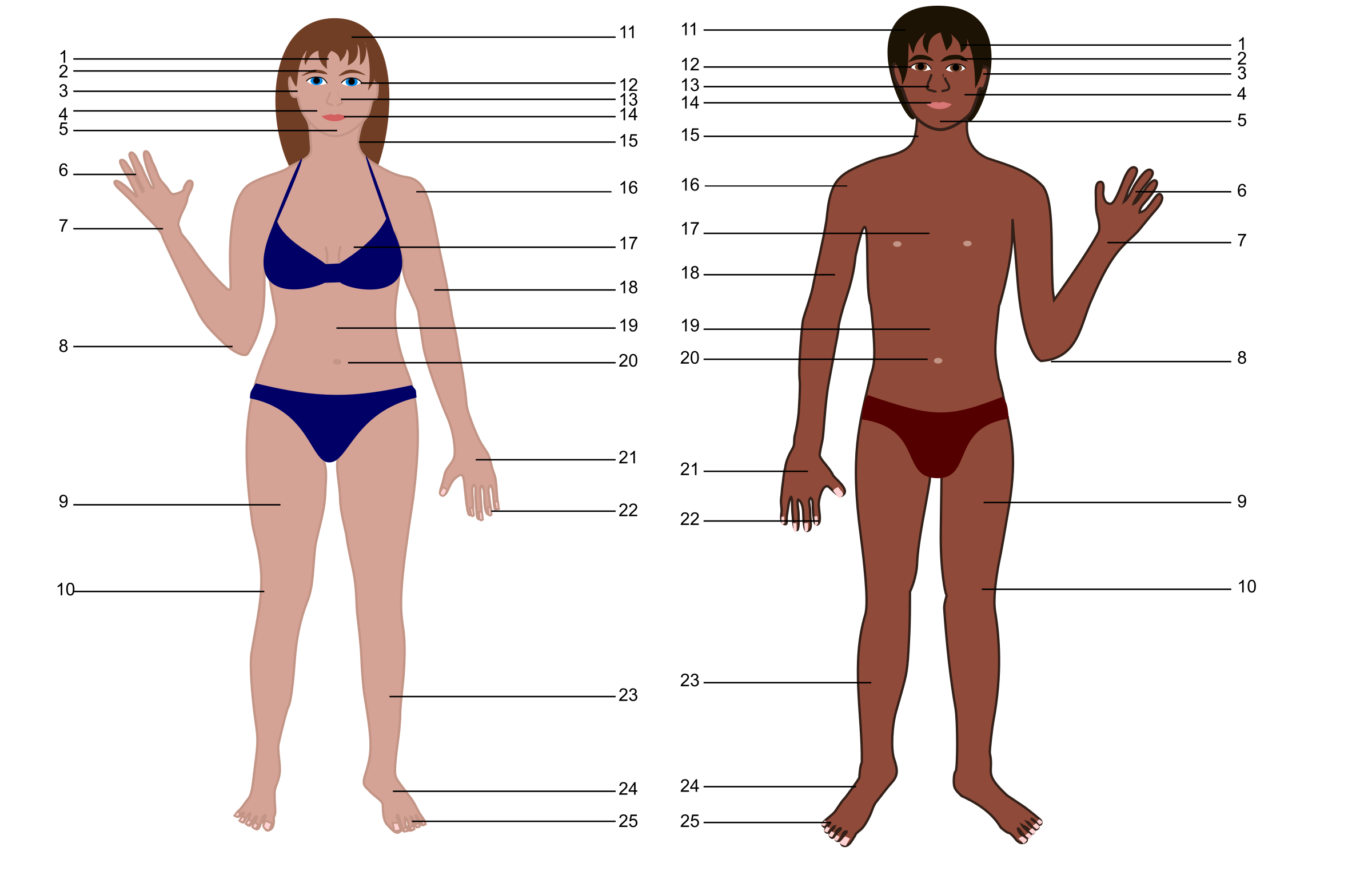 clipart - human body both genders with numbers, Muscles