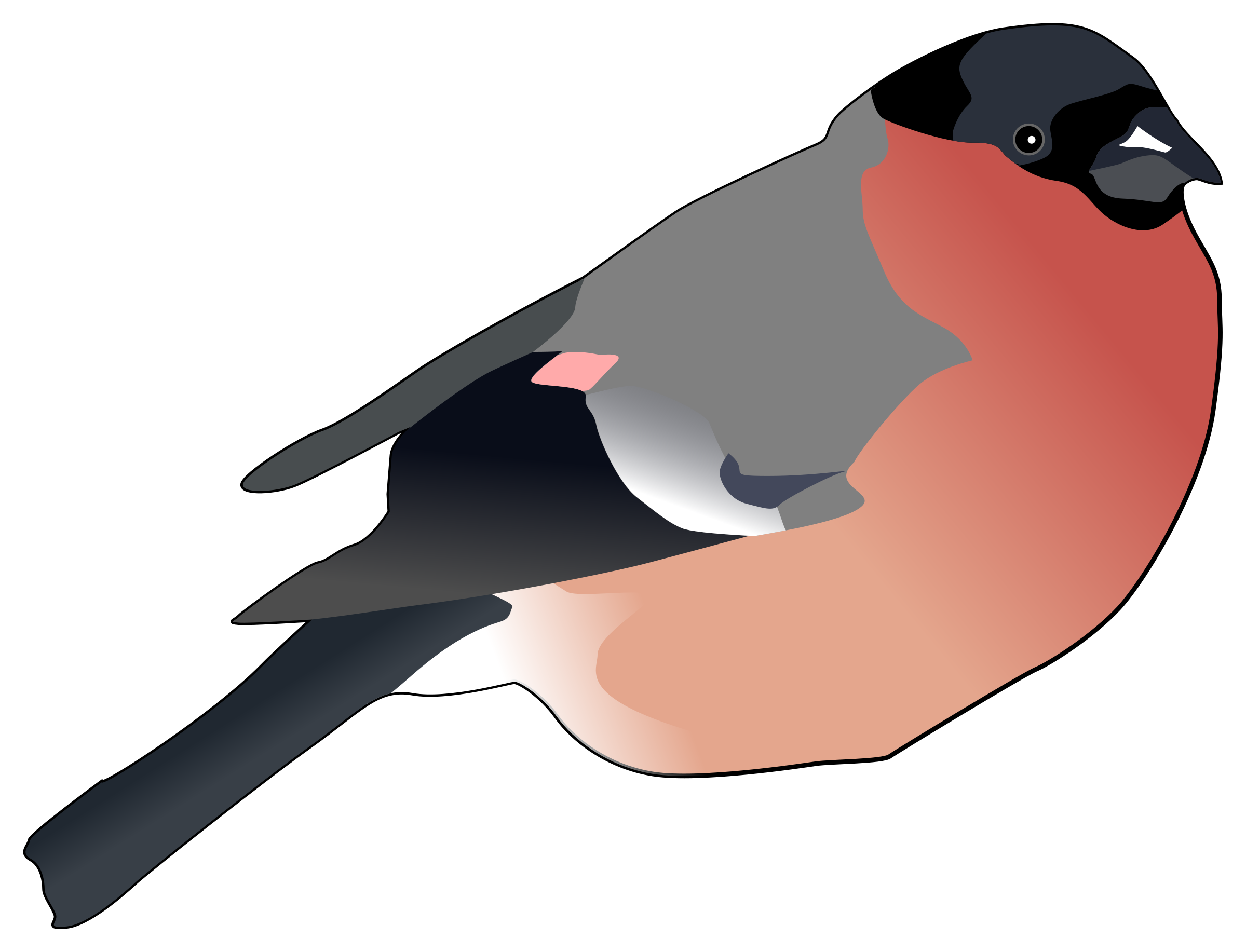 Eurasian Bullfinch by pesasa