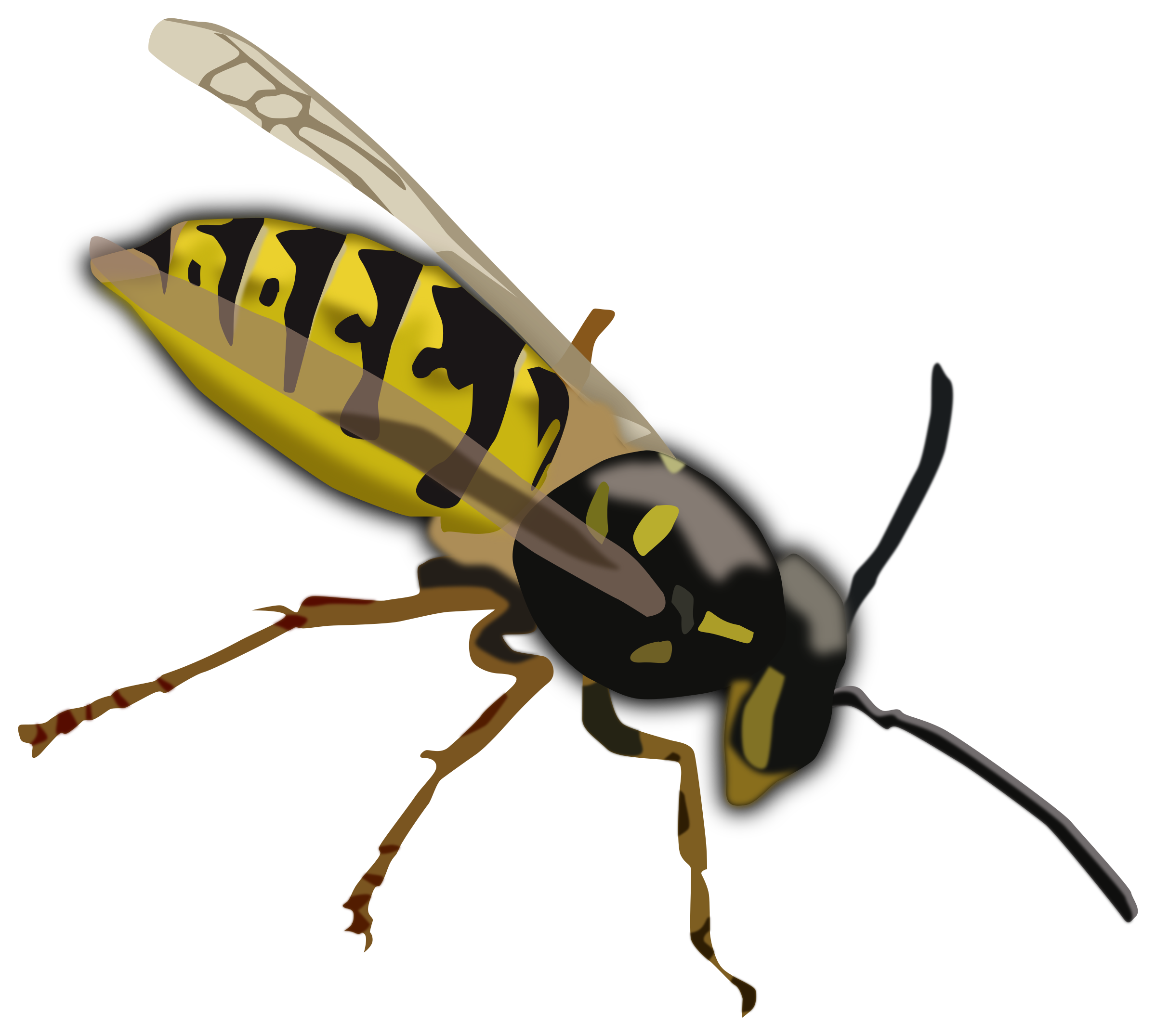 Wasp by pesasa