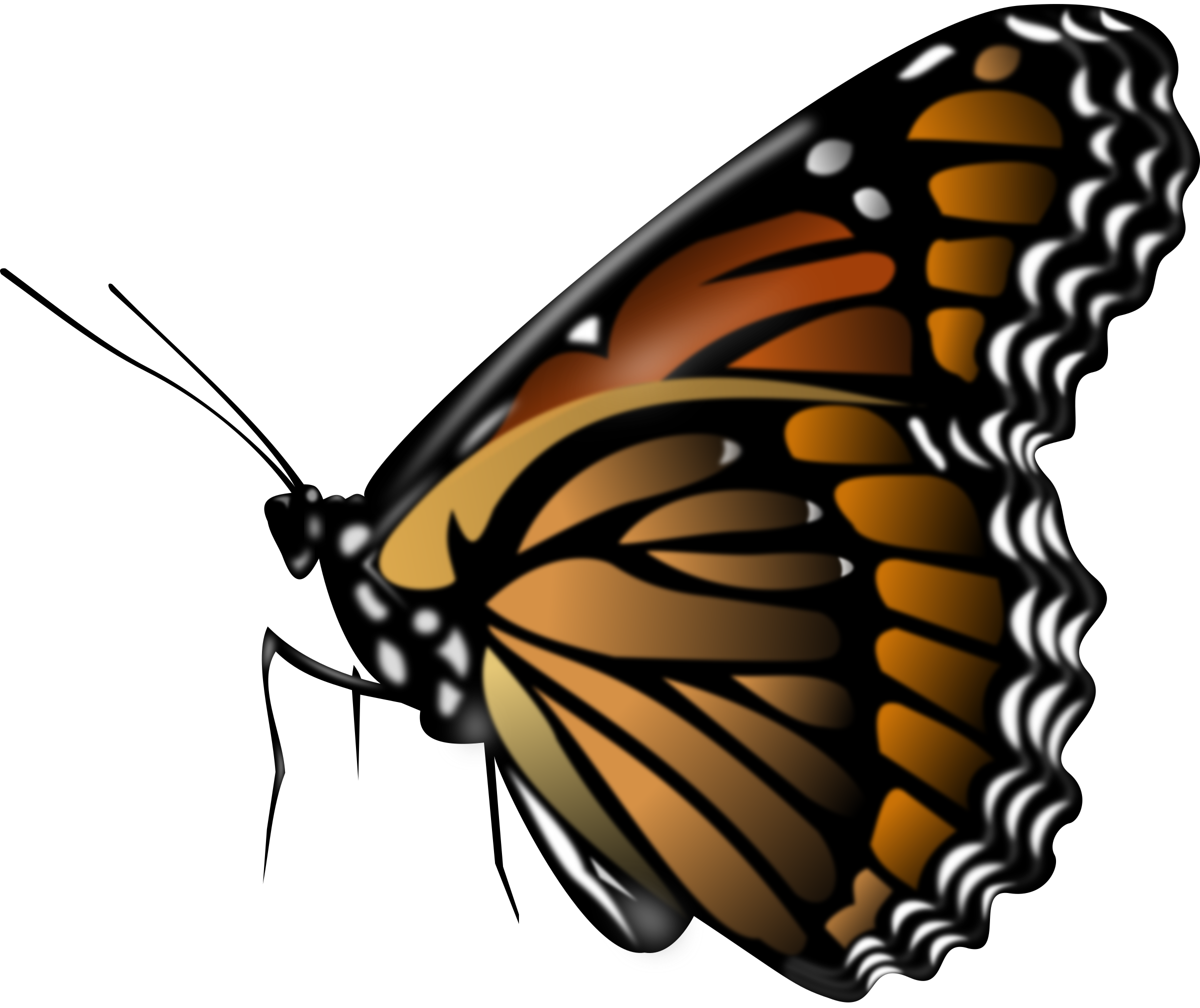 Monarch Butterfly by Merlin2525