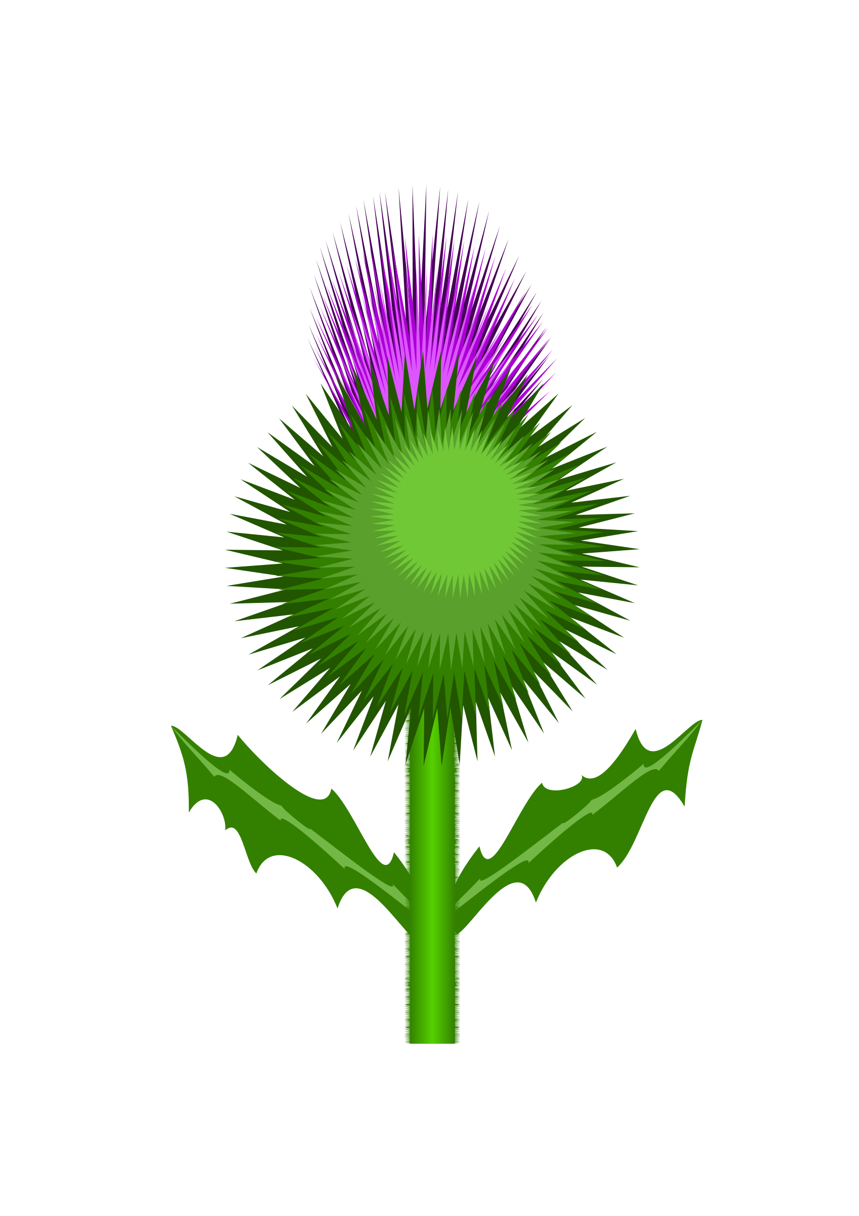 Scottish Thistle by kevie