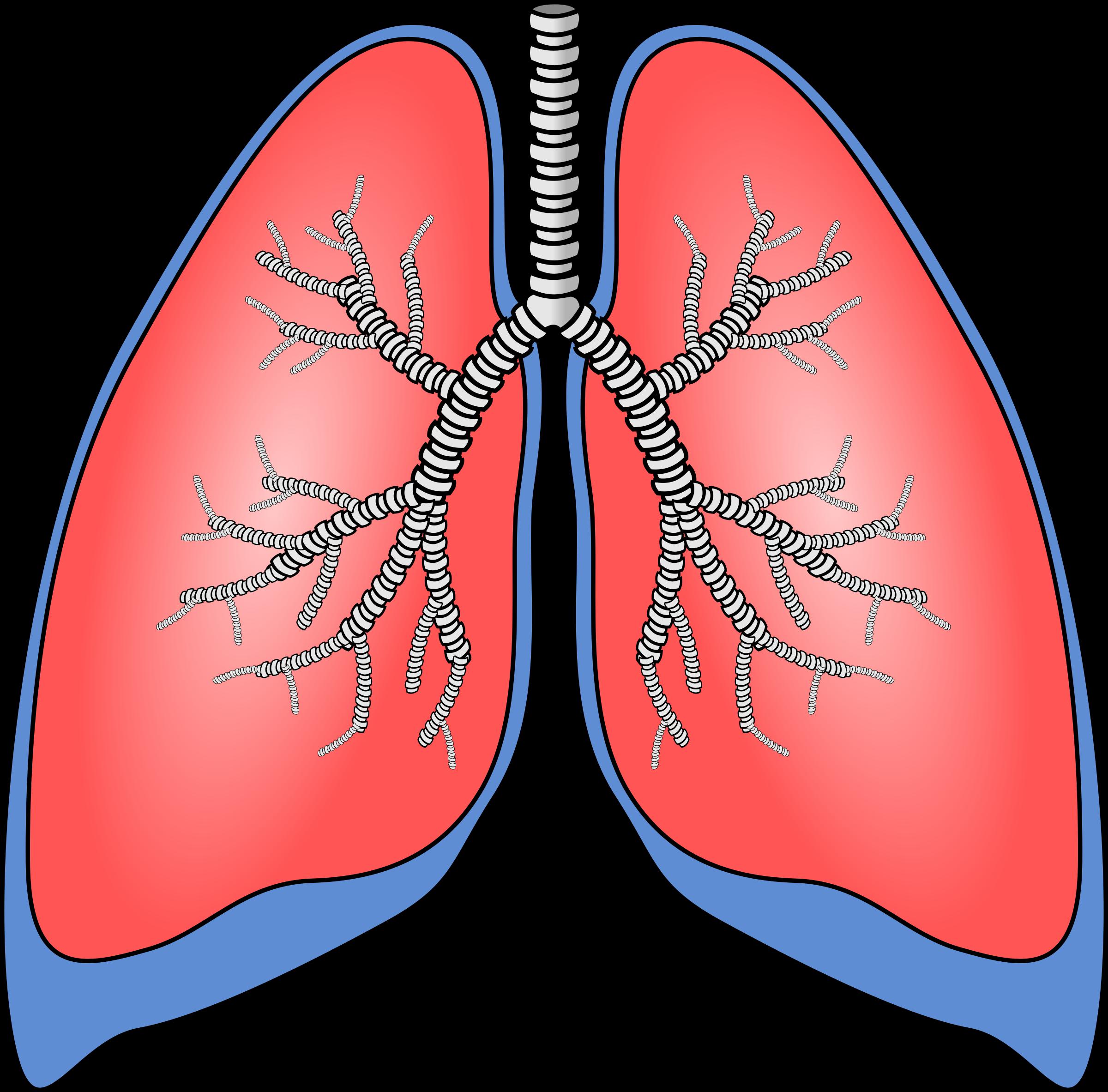 Polmoni - Lungs by krypt