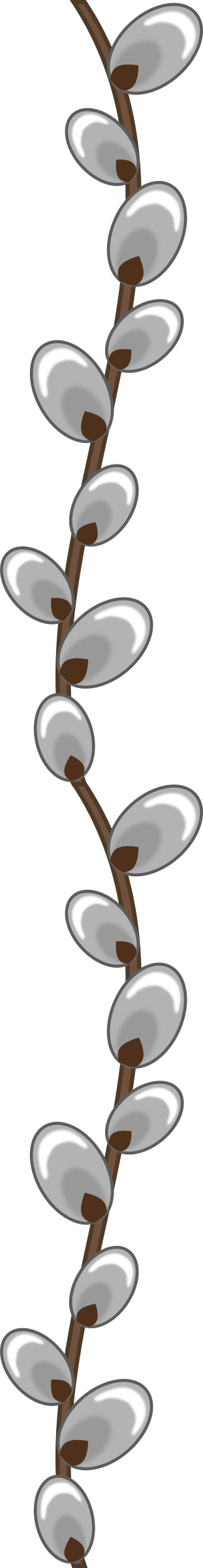 Clipart Willow Buds