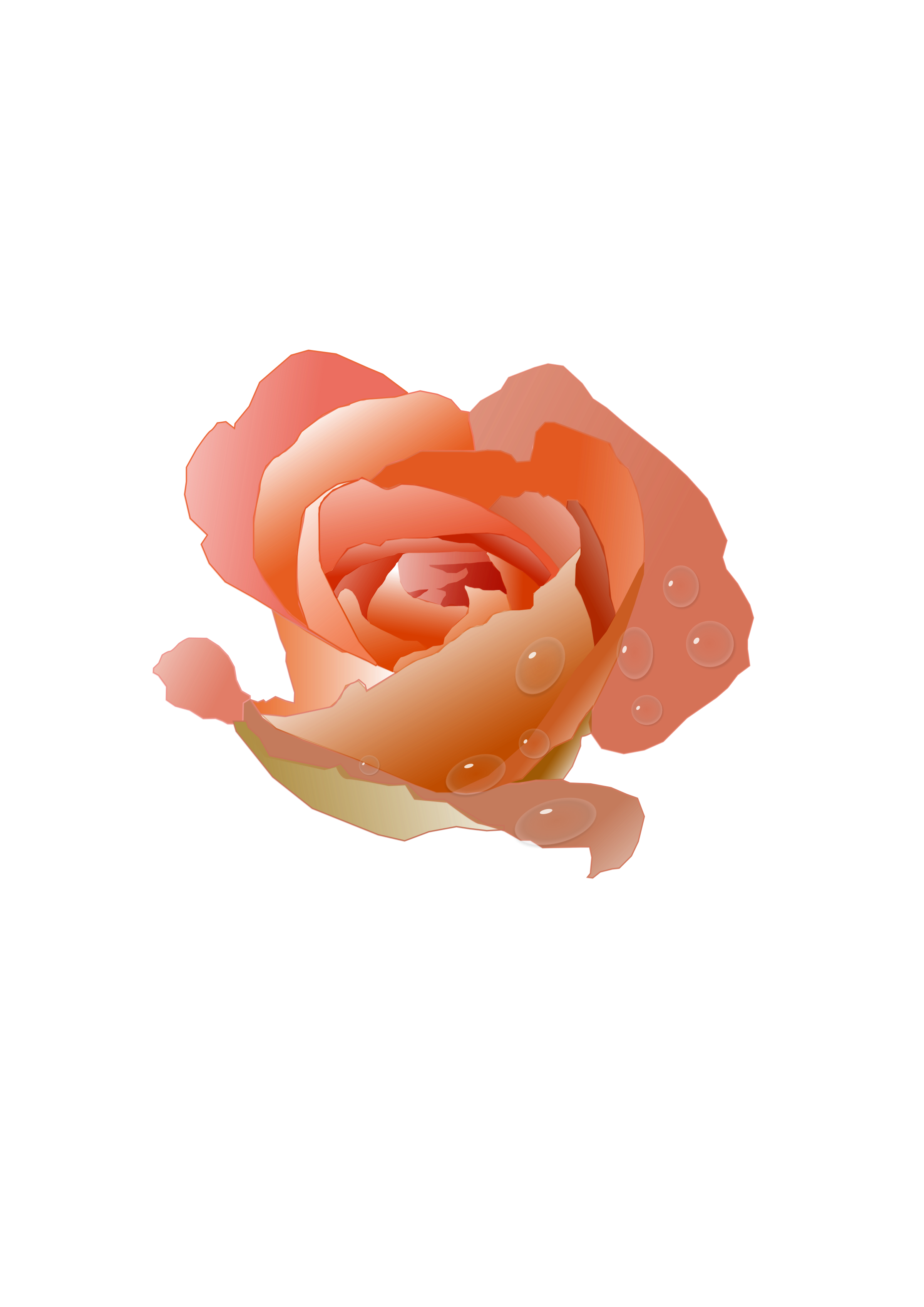 Rose with Drops by Funcky Jack