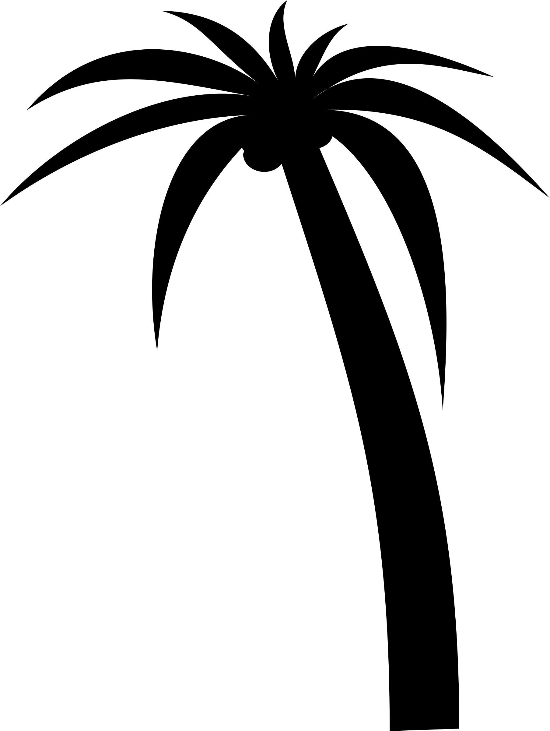 palm tree by Anonymous