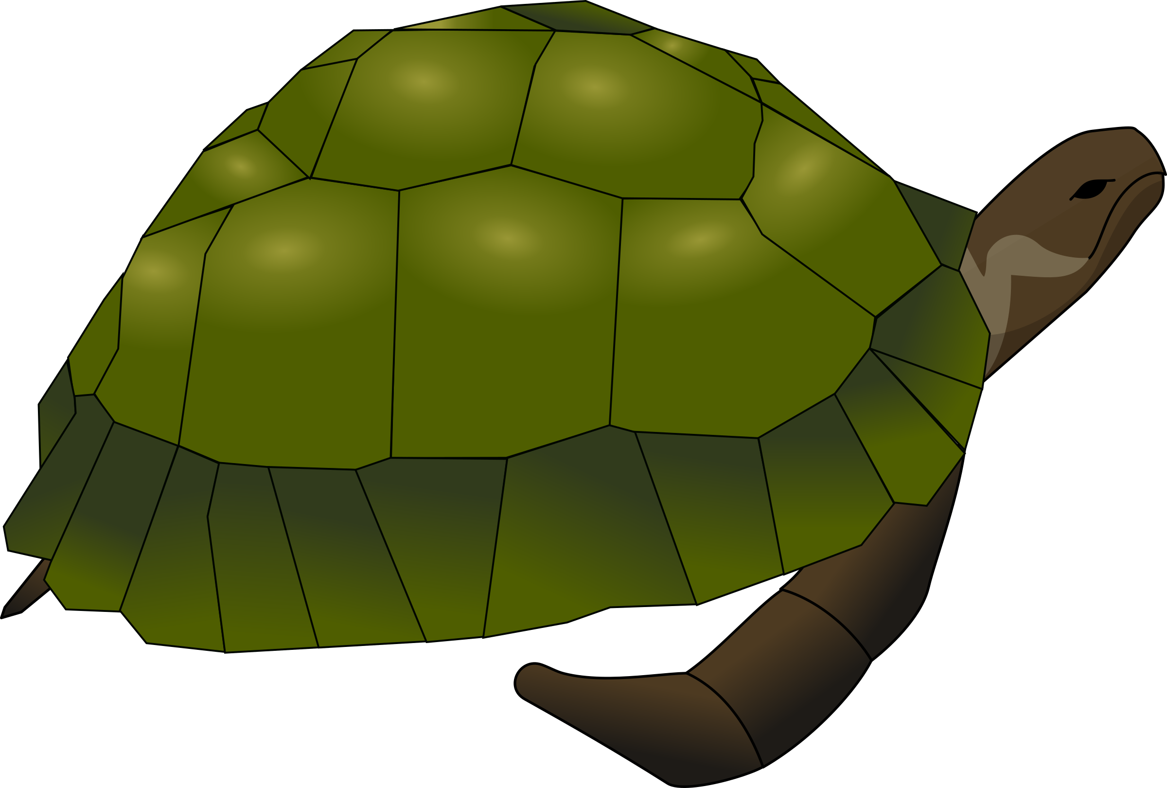 turtle by Anonymous
