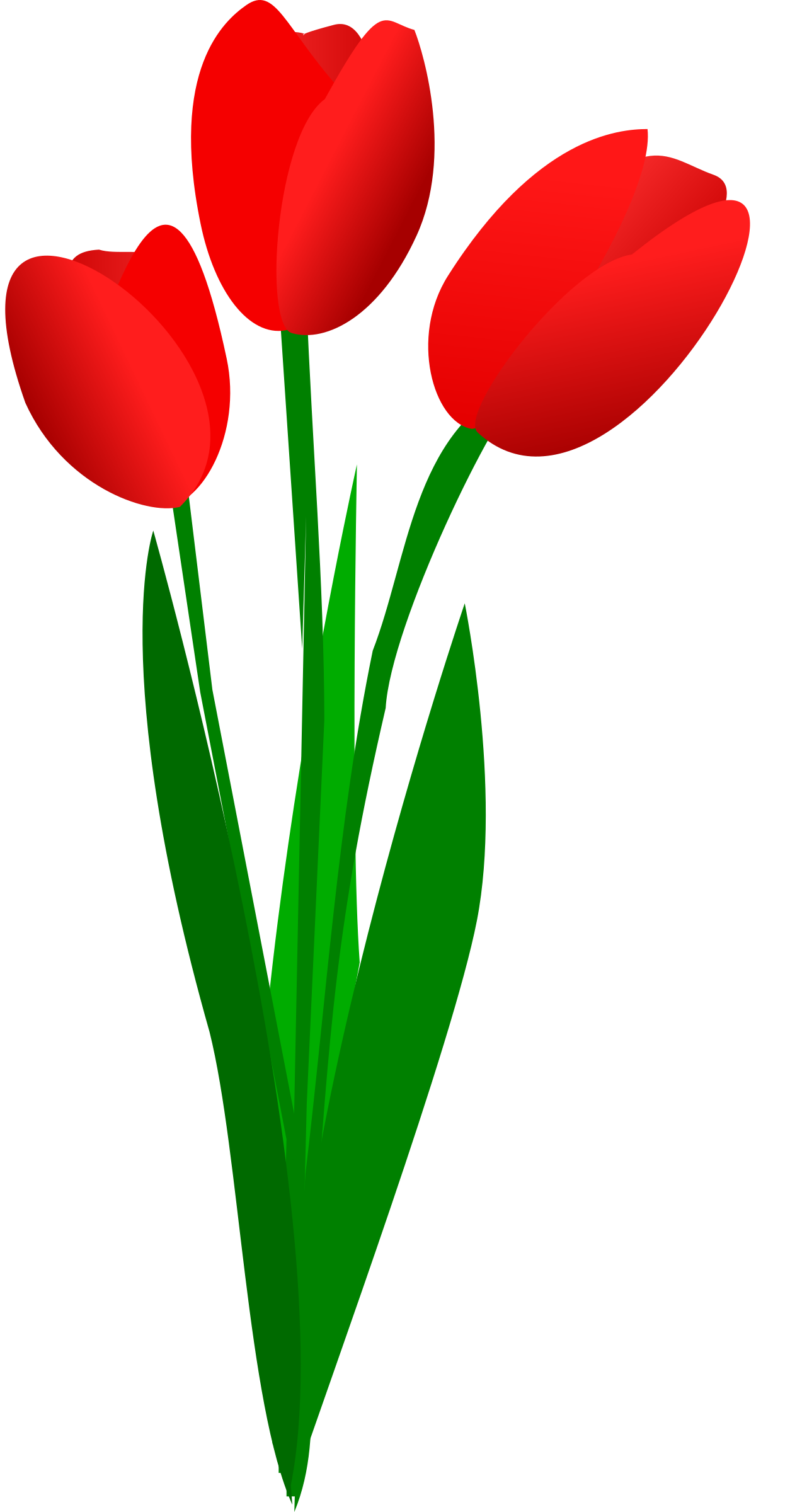 three red tulips by OlKu