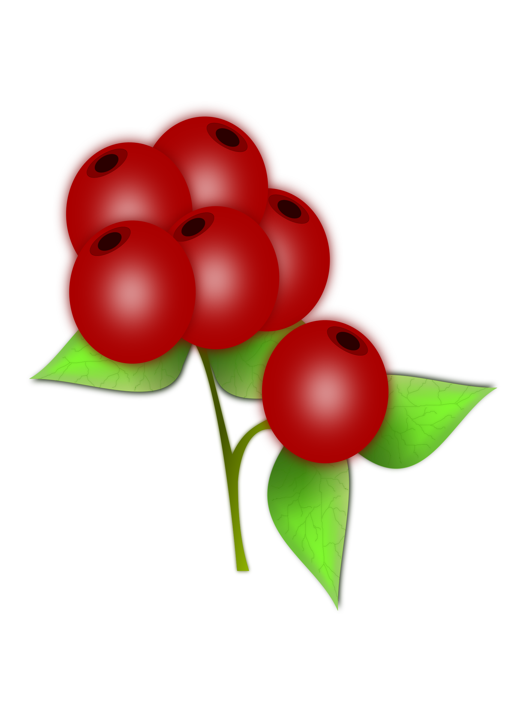 Red berry by gblas.ivan