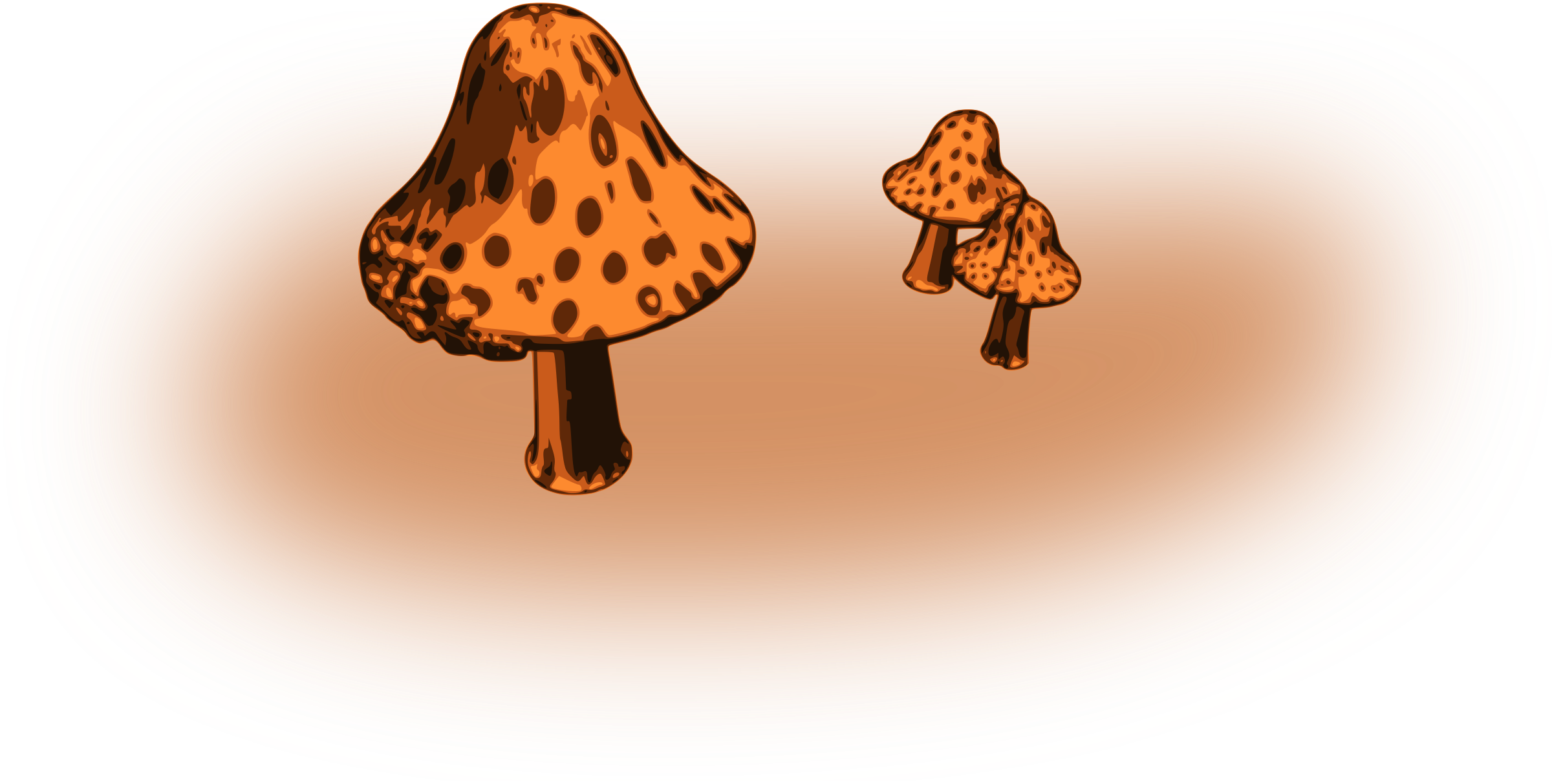 Mushrooms by mazeo