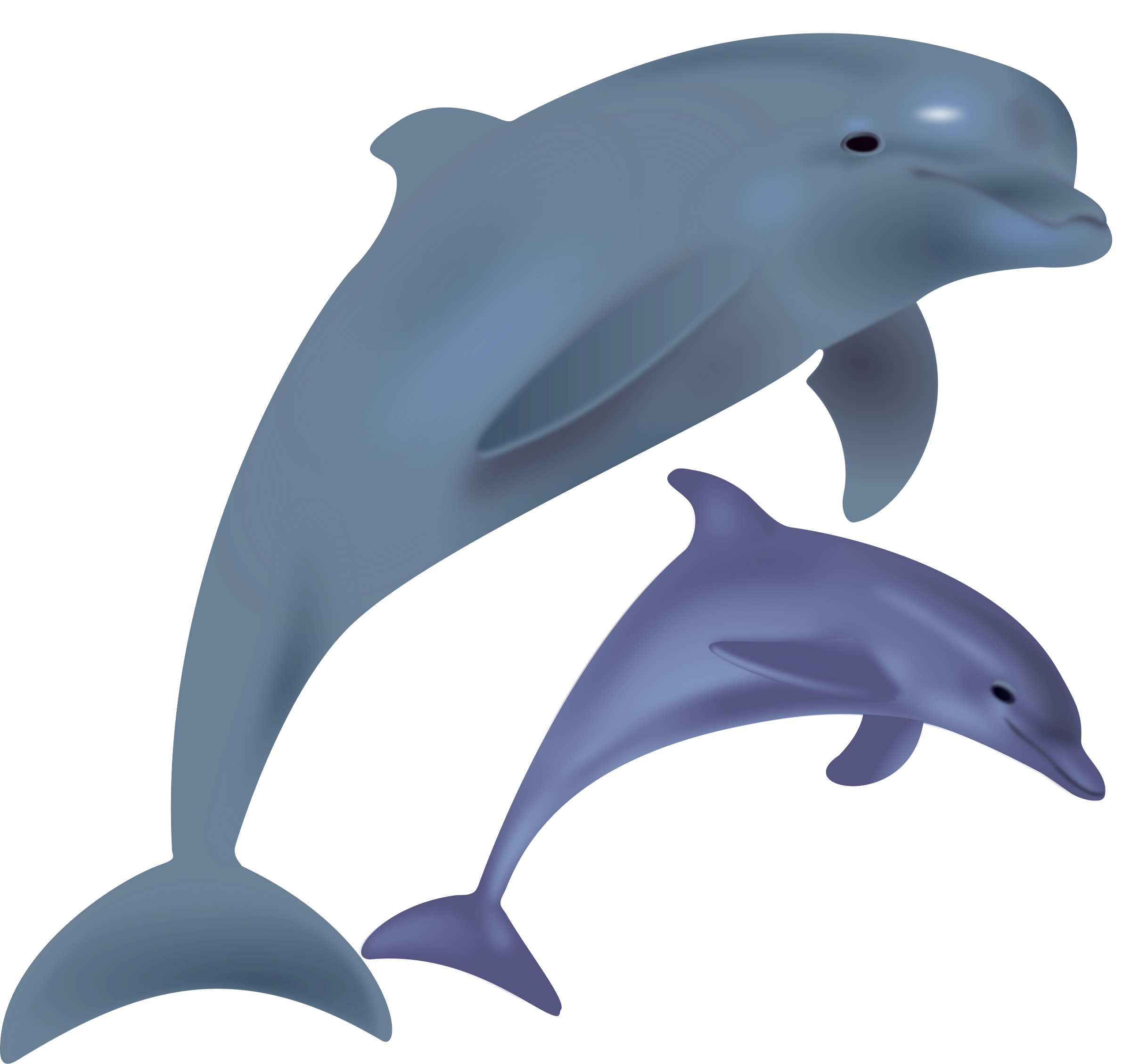 dolphins, delfinai, animals by Keistutis