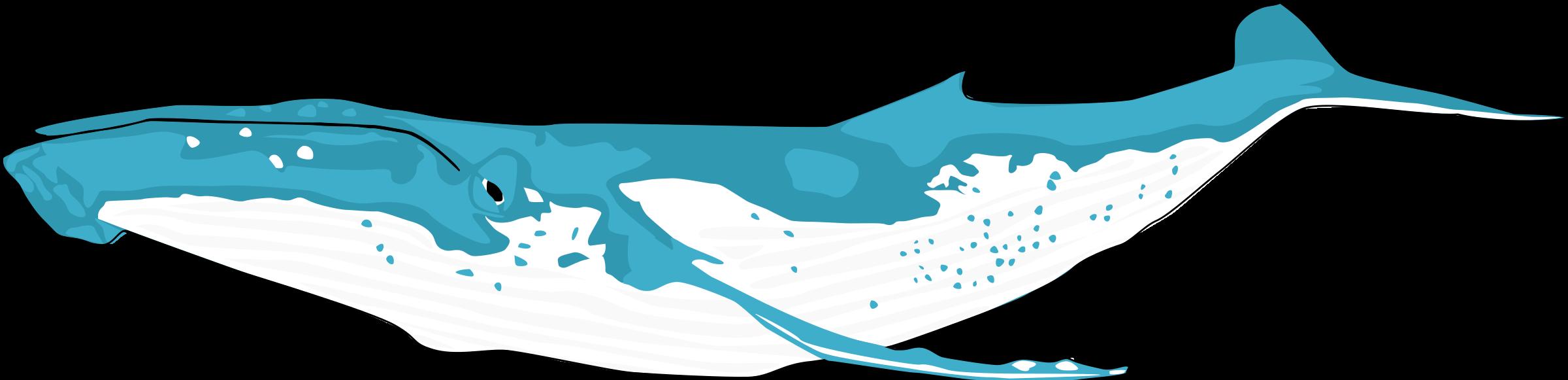 humpback whale by ha1flosse