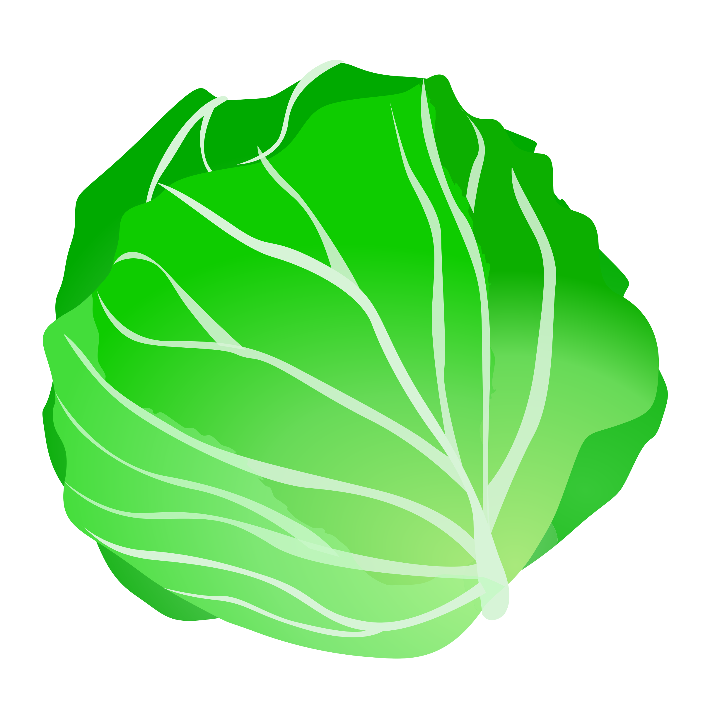 cabbage by ycteo
