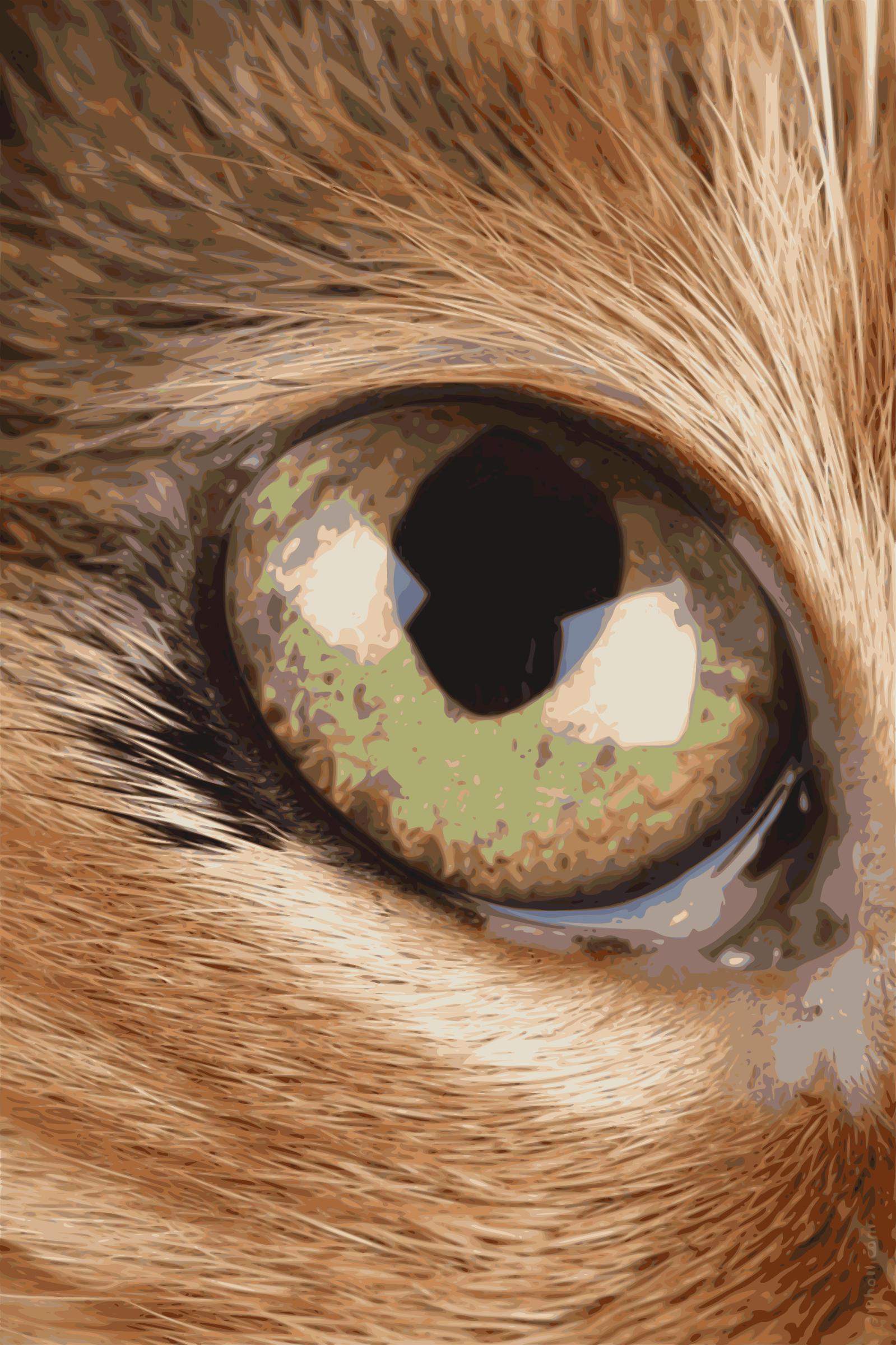 Как сделать глаза как у кошки макияж Визаж и здоровье глаз 37