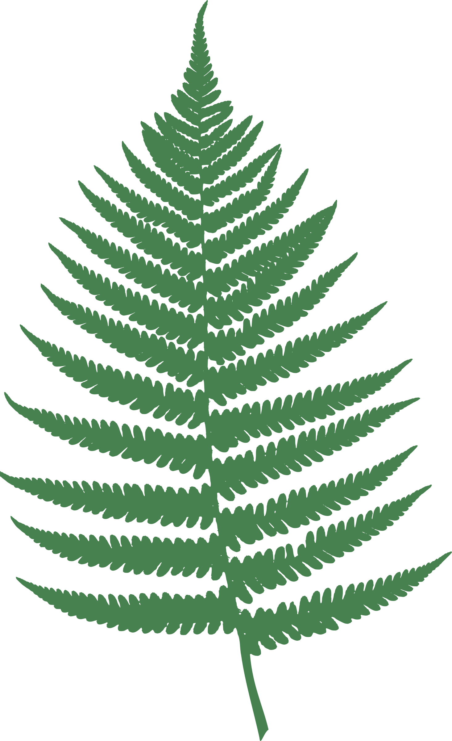 Fern leaf by Moini