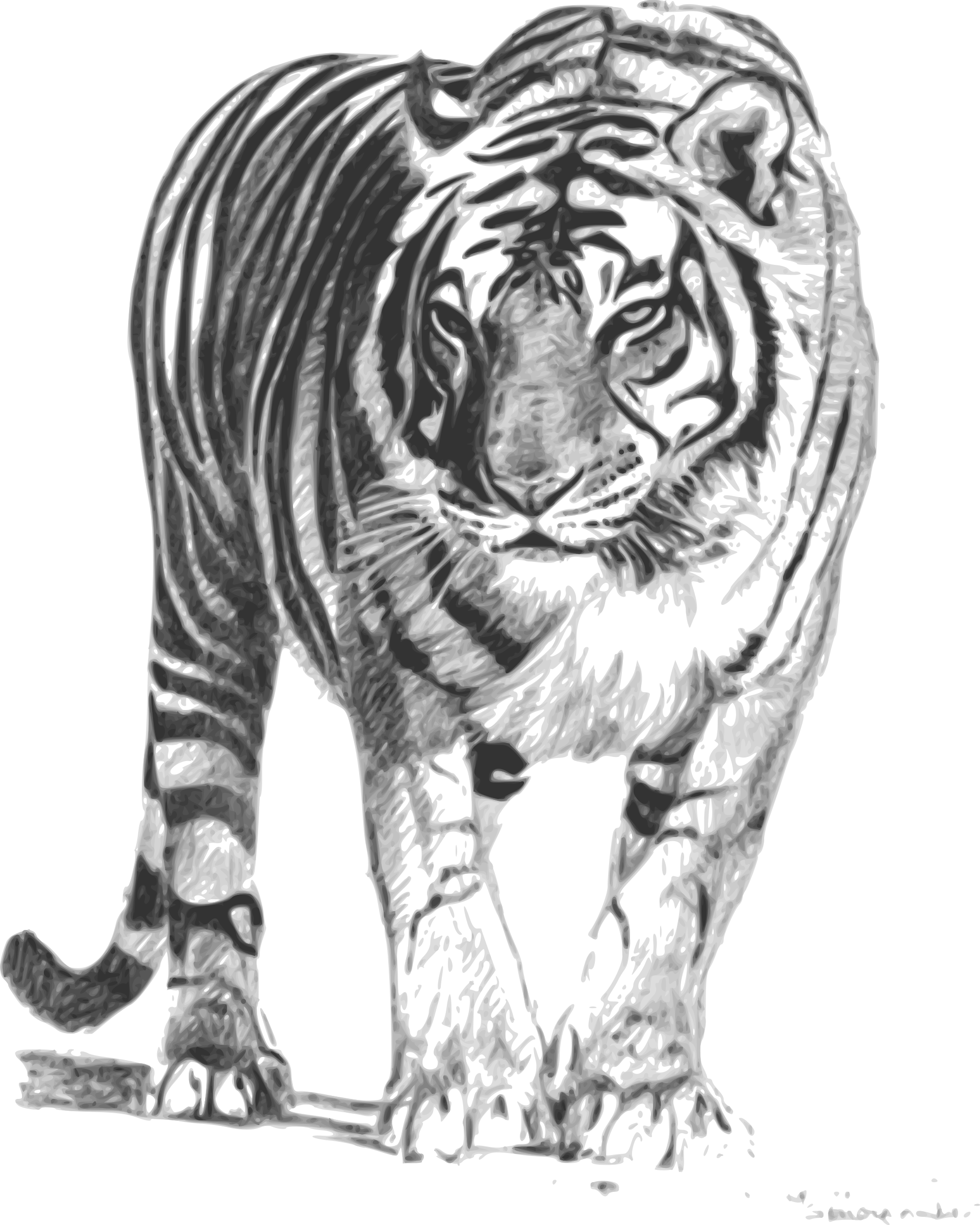 Bengal Tiger by karthikeyan
