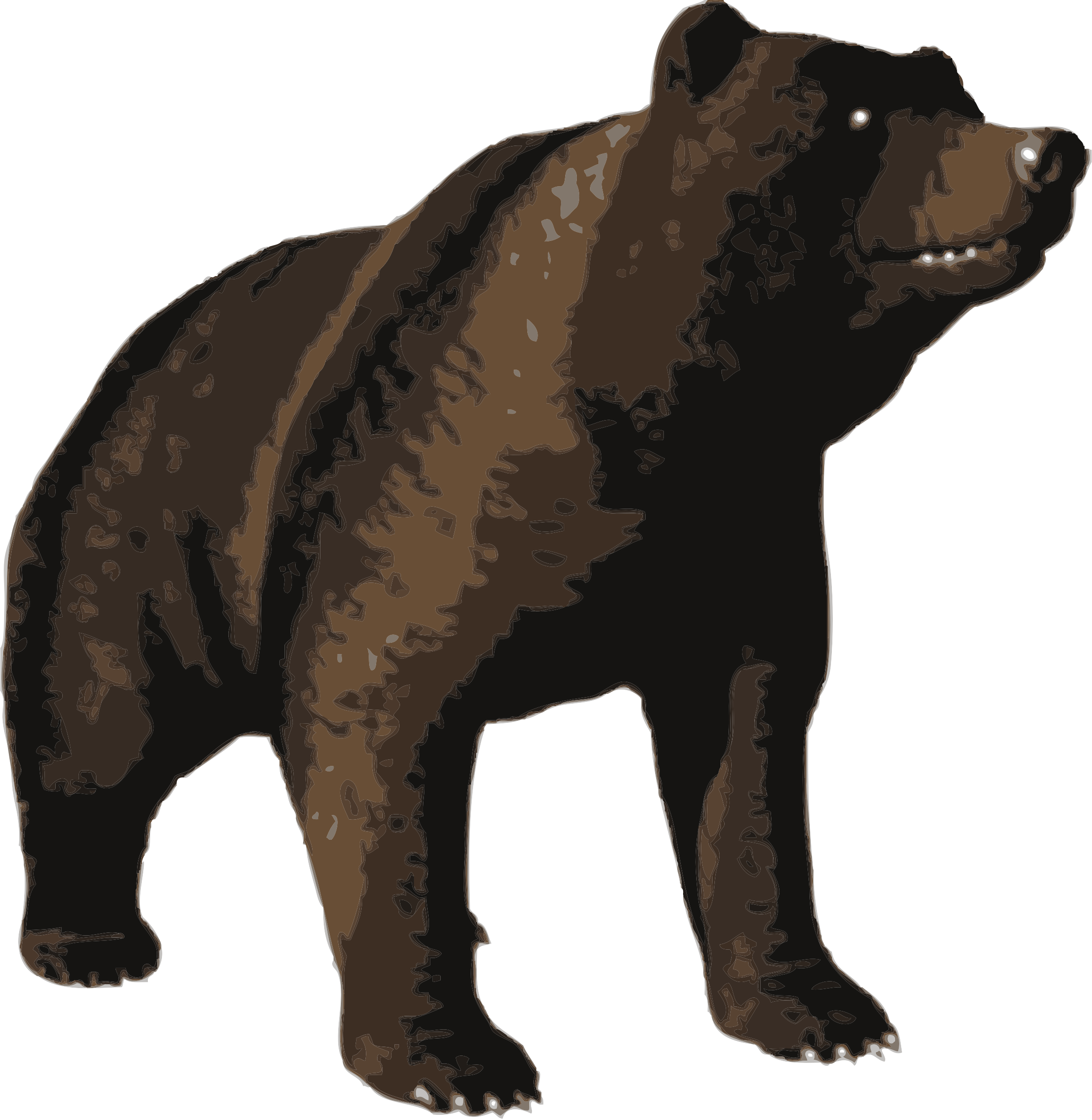 Brown bear by Fractalbee