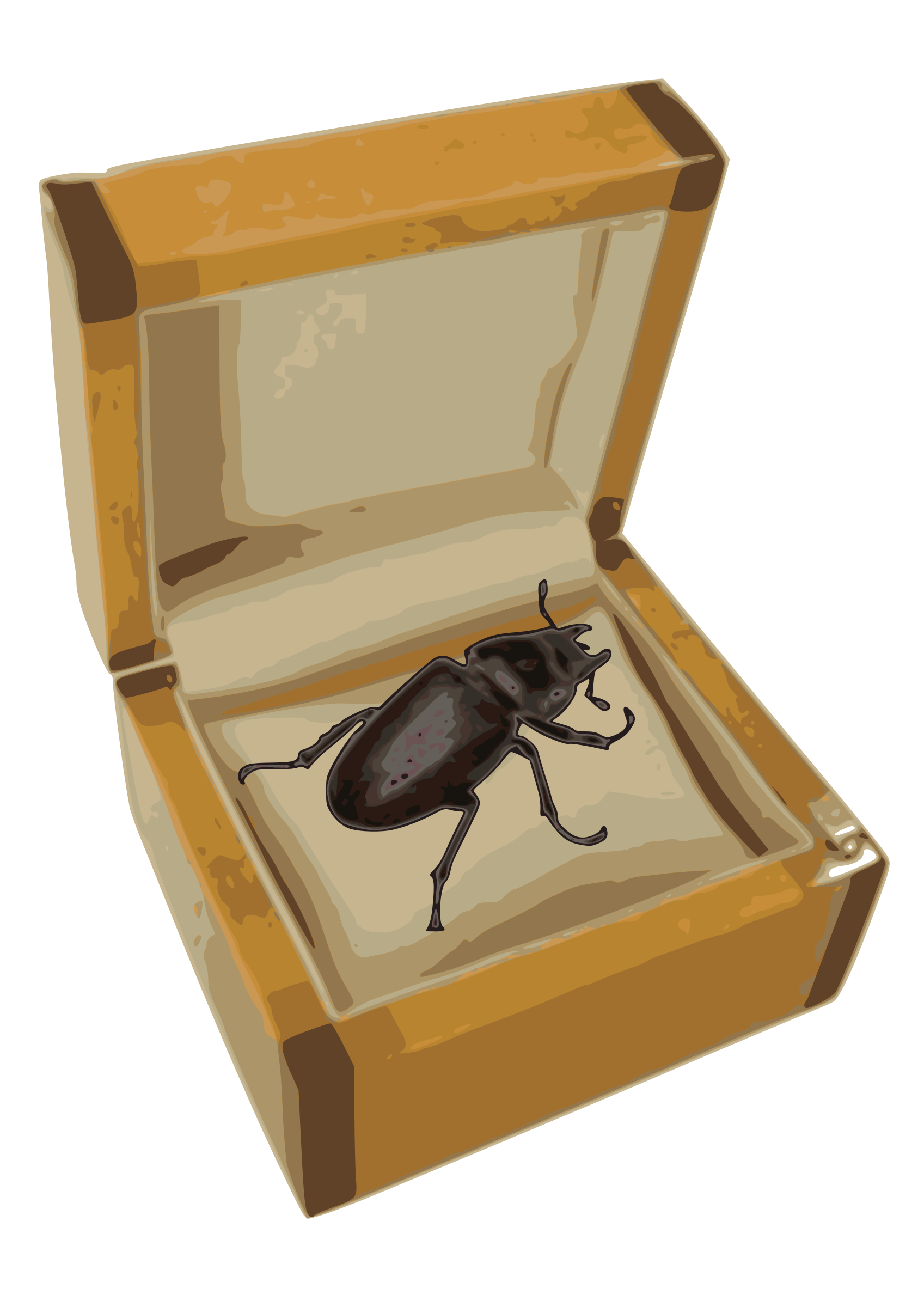 Beetle in a Box by danfreak