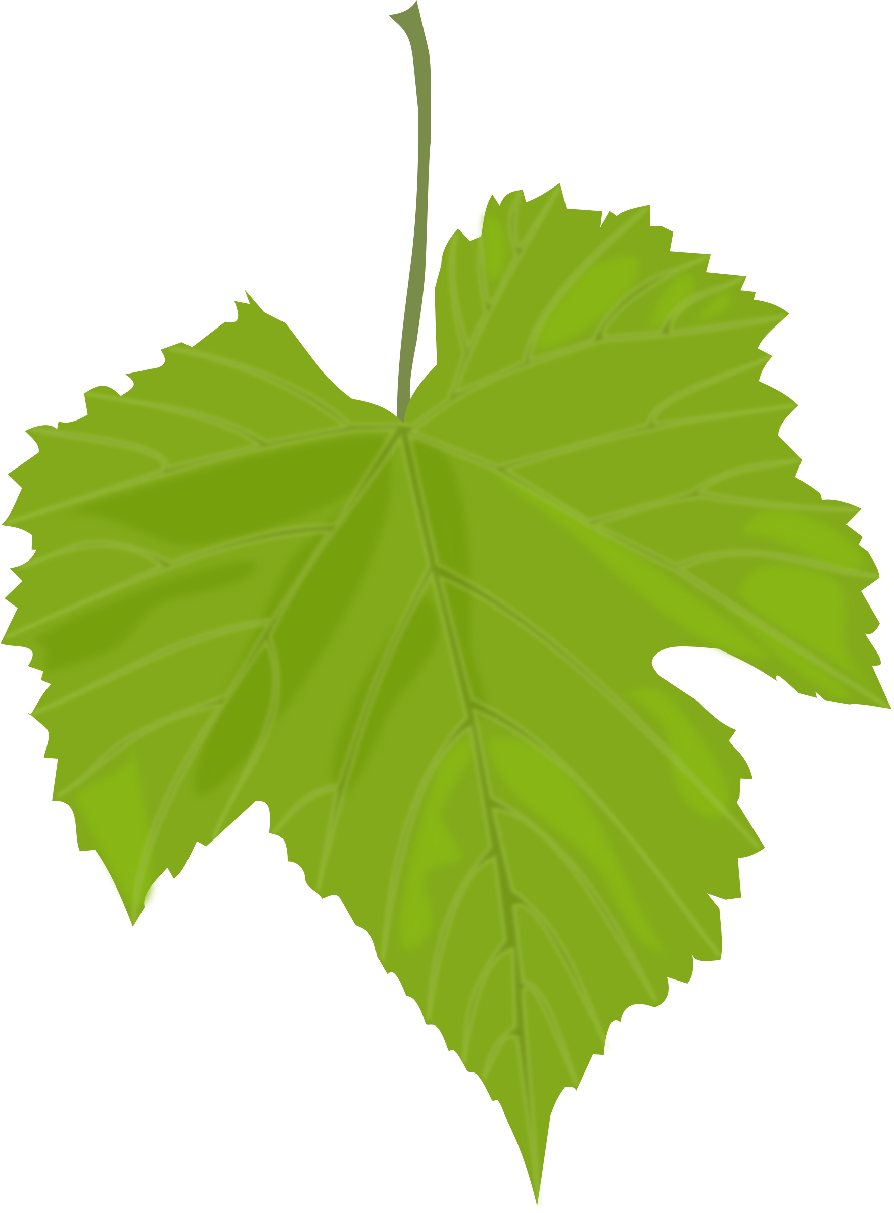 Grape Leaf by mi_brami
