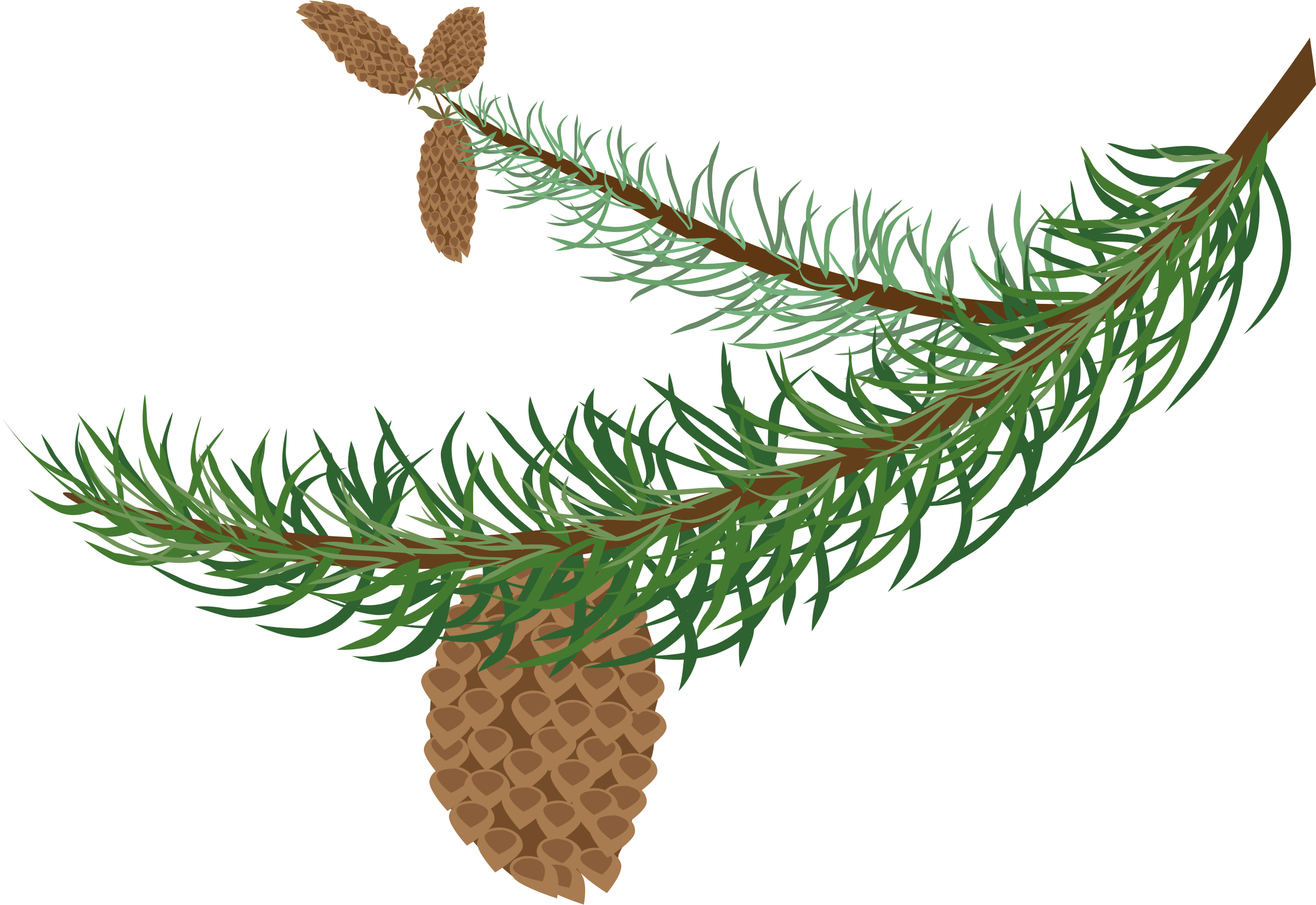 fir branch with cones by OlKu