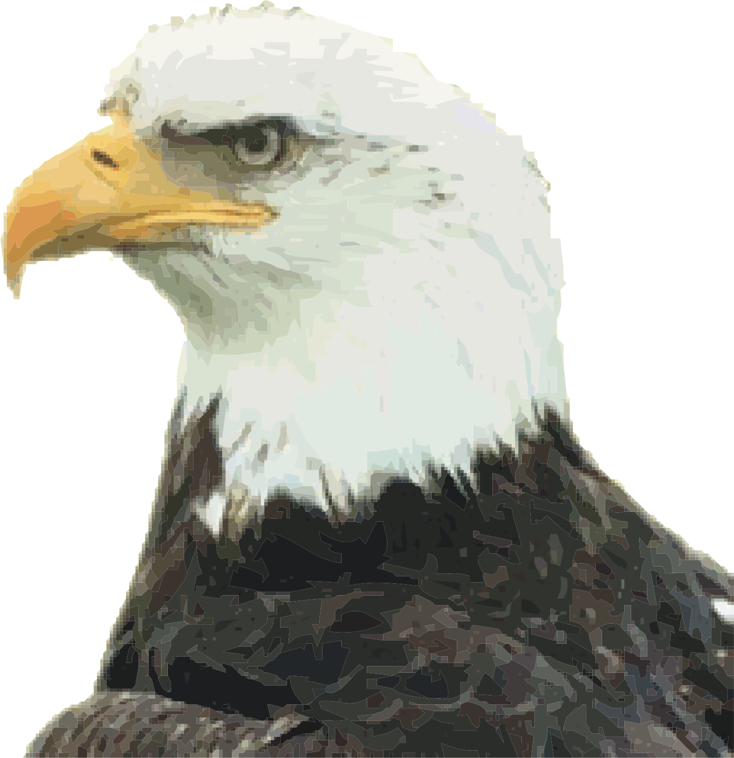 bald eagle by jd4x4