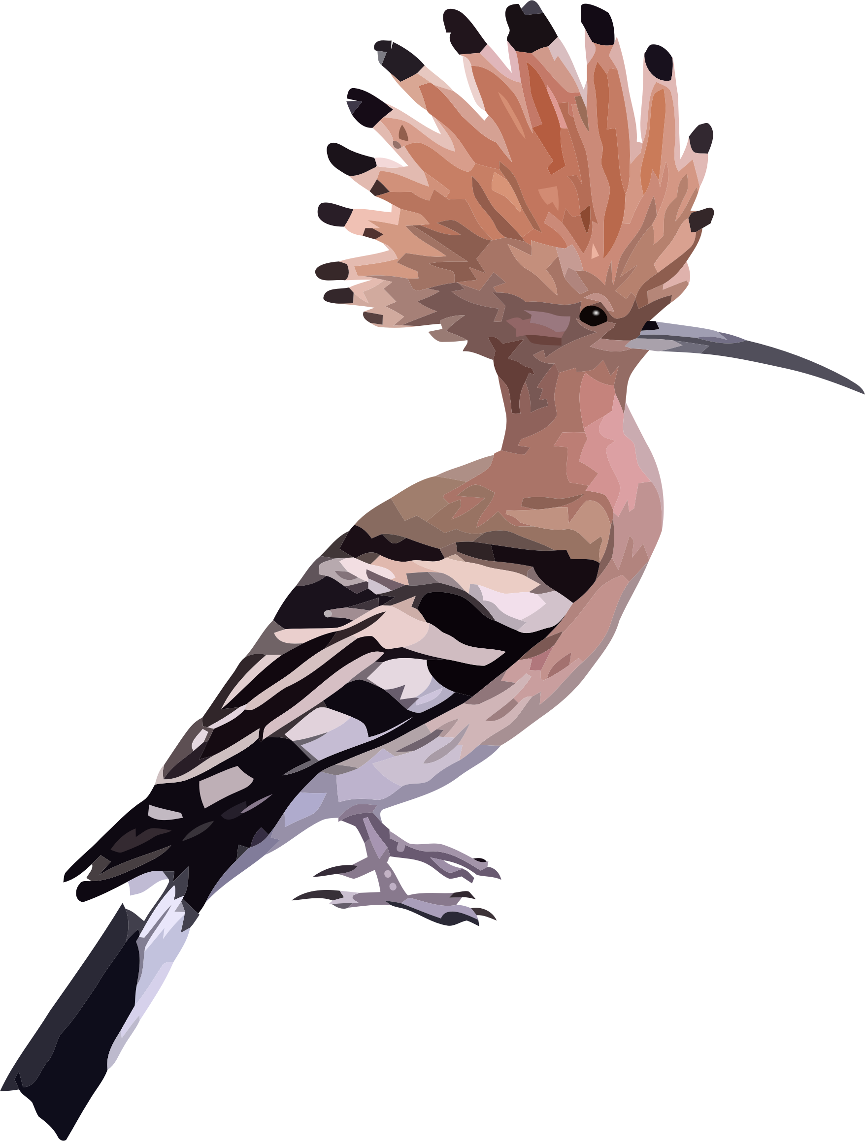 hoopoe by kwstasm83