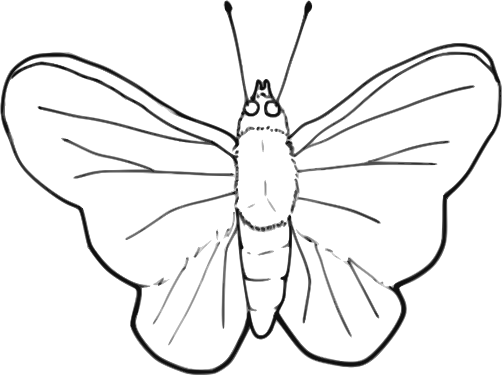 Line Art Butterfly : Big image png