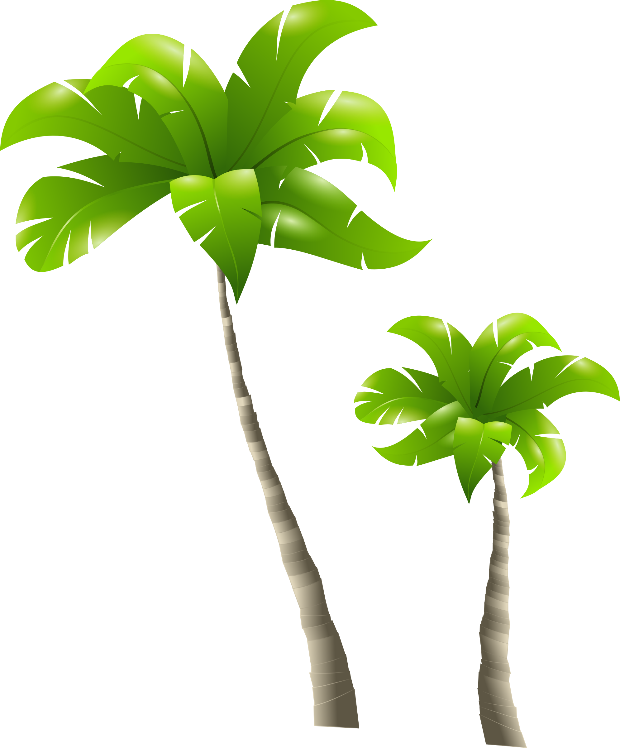 Palm Trees - Palmiers by cyberscooty: https://openclipart.org/detail/182635/palm-trees-palmiers