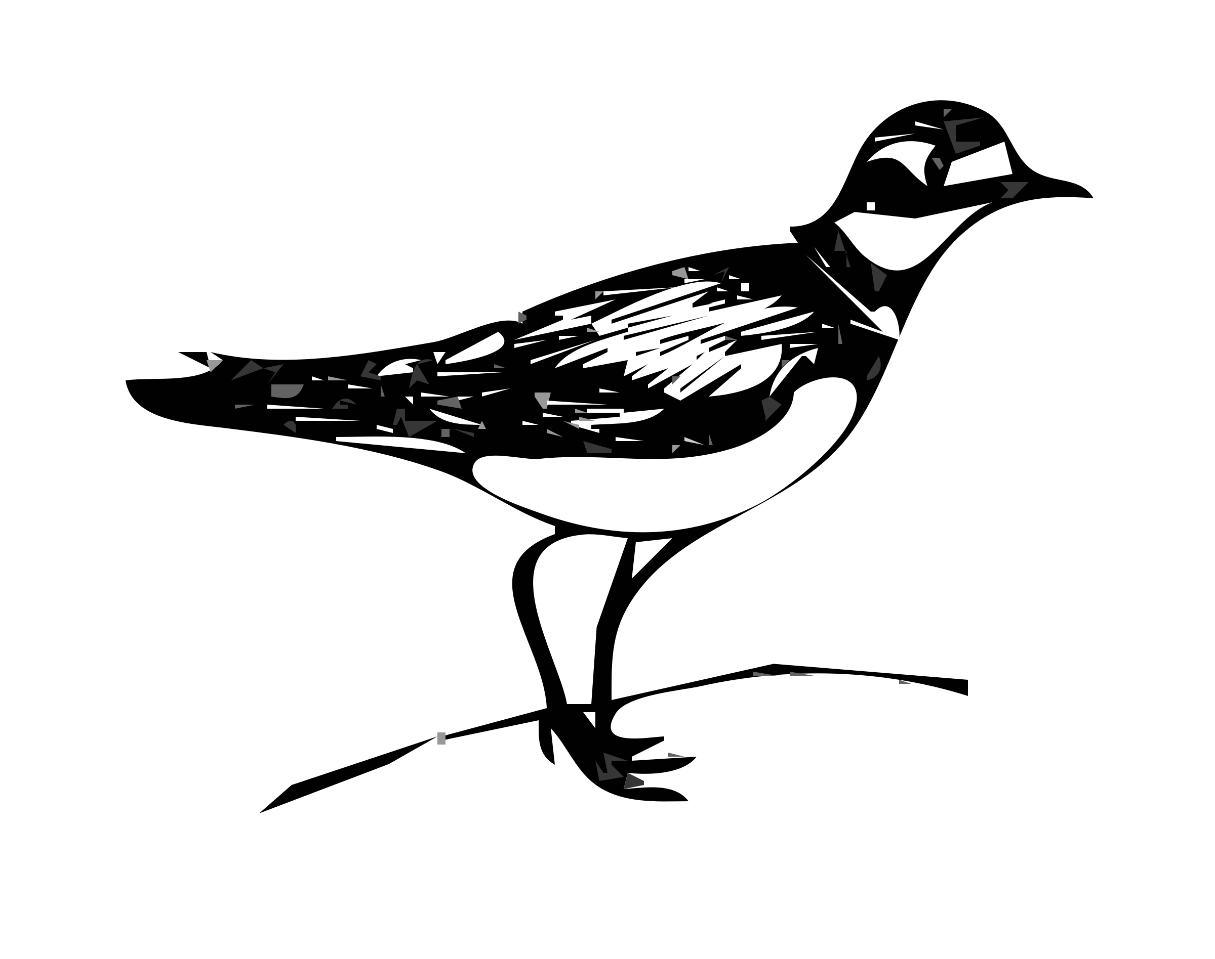 killdeer bird by worldlabel