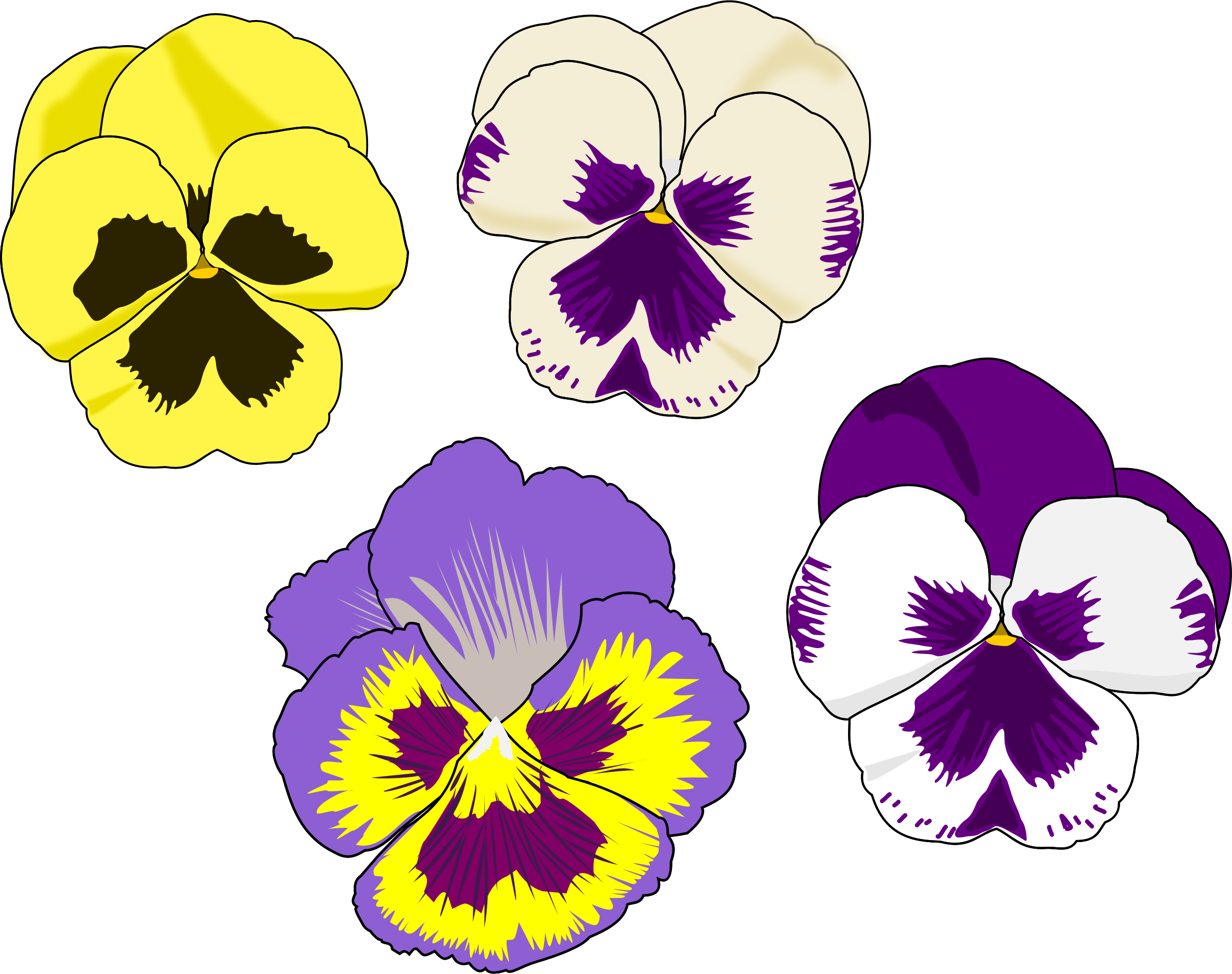 Pansy Selection by cookieater