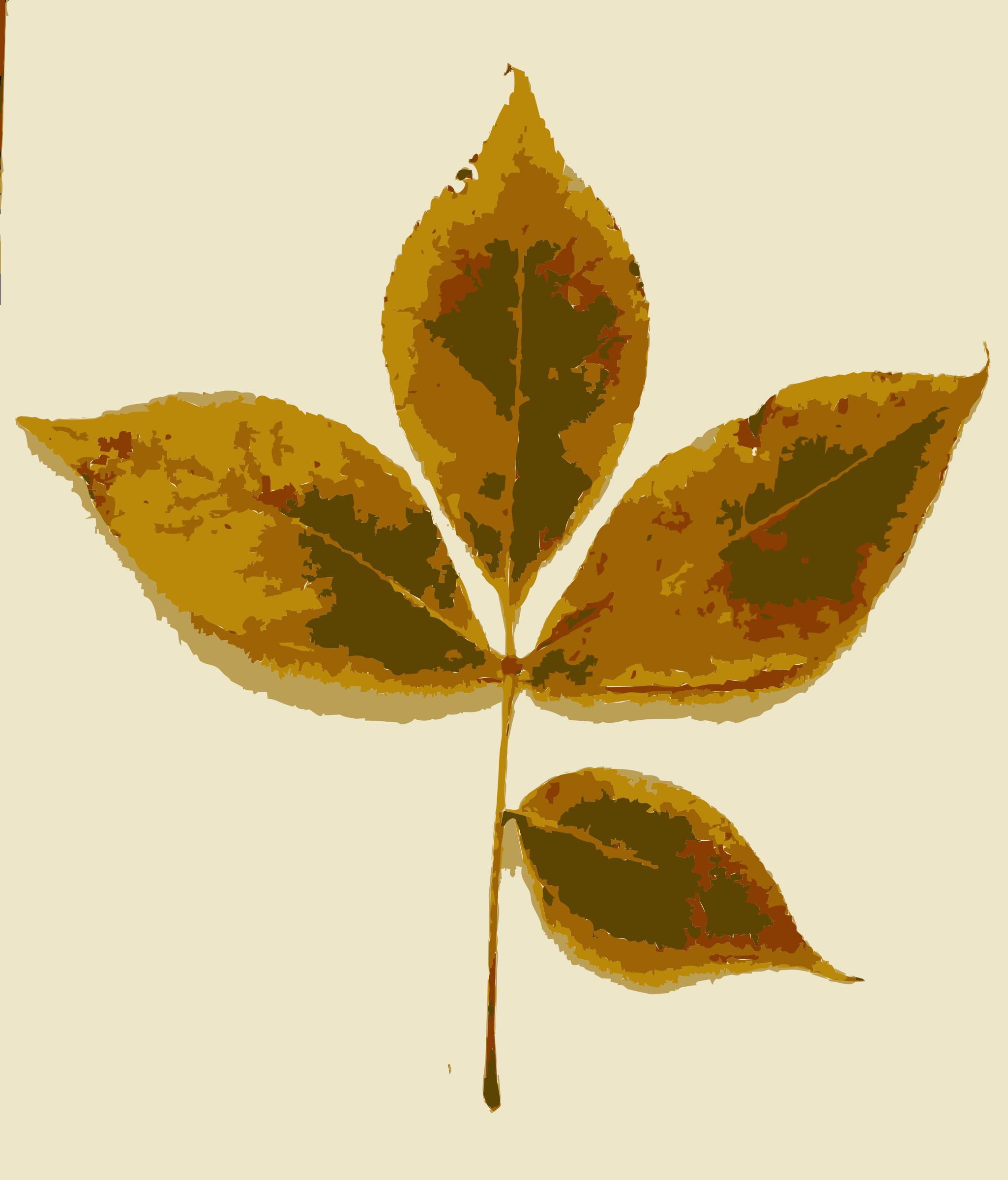 clipart various missouri tree leaves