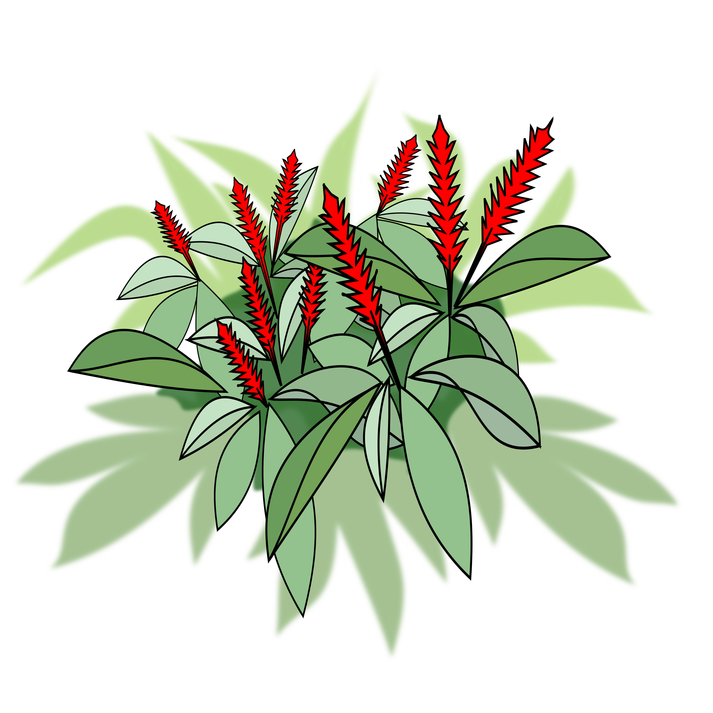 Alpinia Purpurata by jpenrici