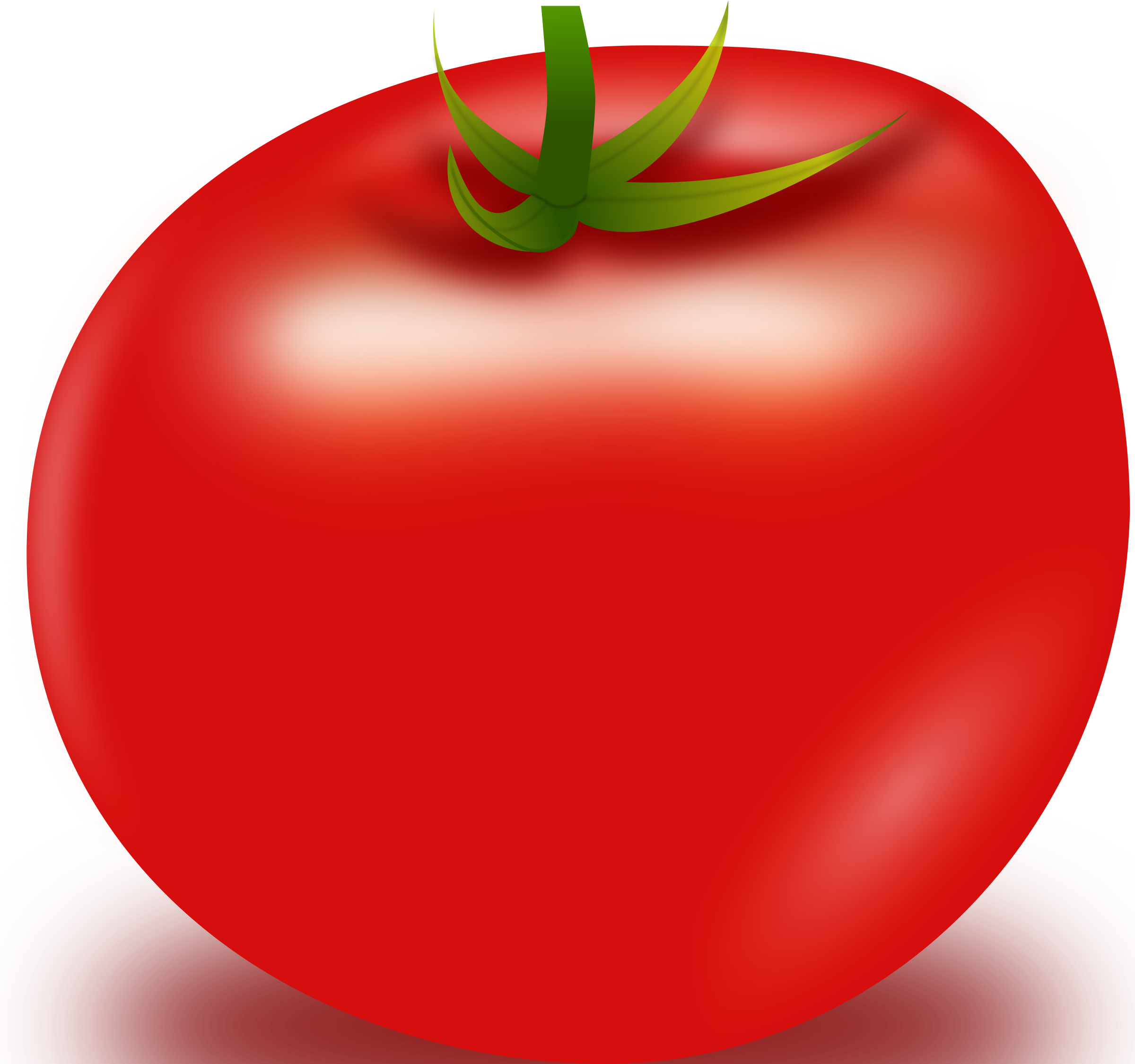Vector Tomato by anonim76