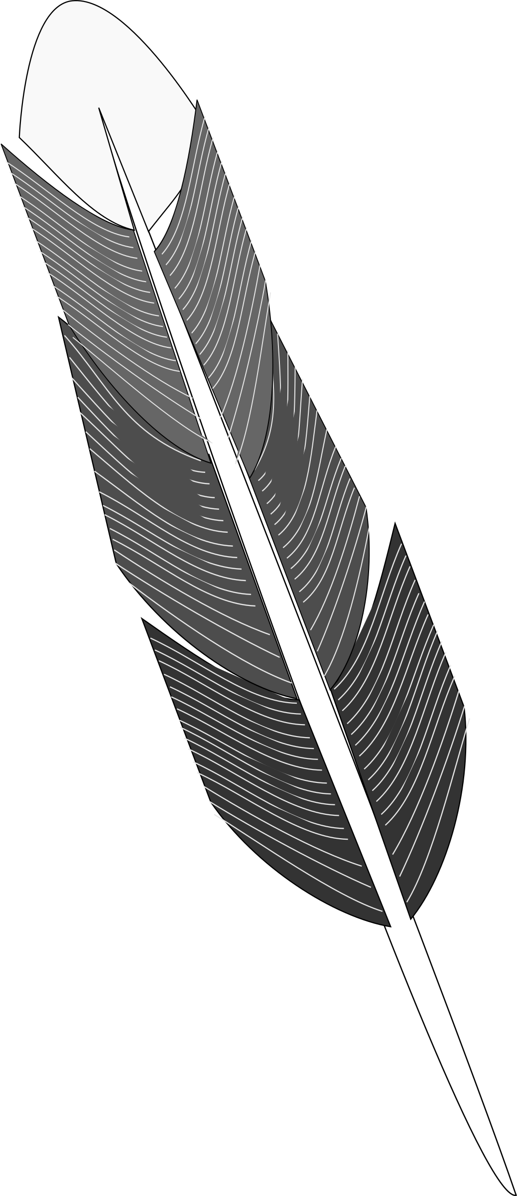 Grayscale Feather by algotruneman