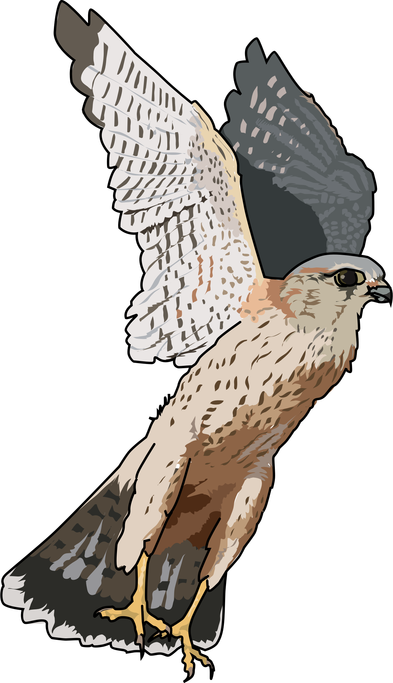 Faucon emerillon - Merlins falcon by enolynn