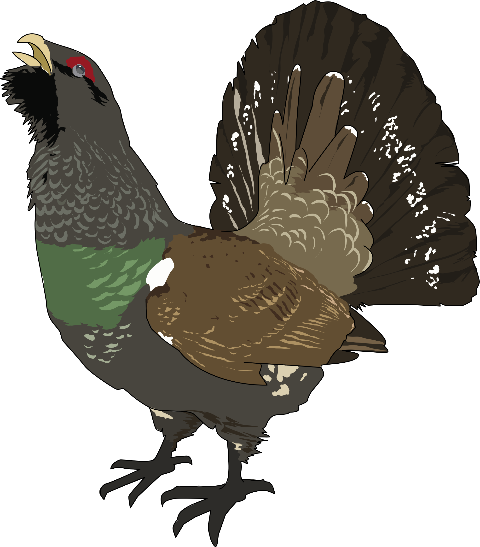 clipart grand tetra coq de bruyere grouse. Black Bedroom Furniture Sets. Home Design Ideas