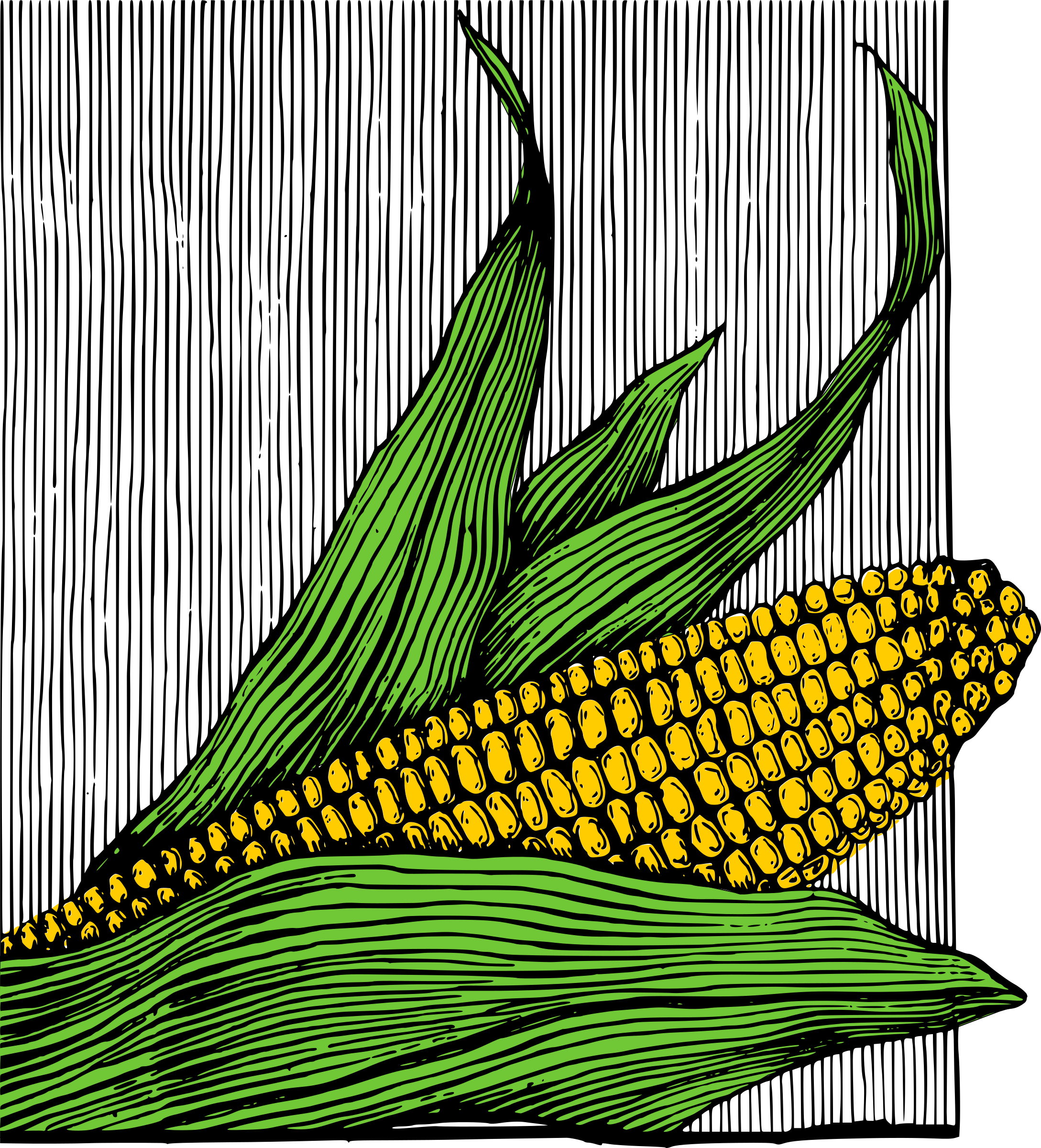 Corn on the Cob - Colour by j4p4n