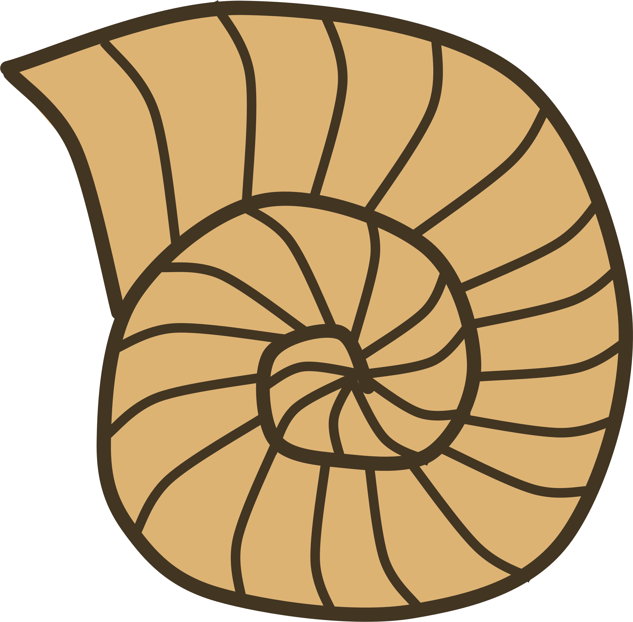 Snail Shell by Scout