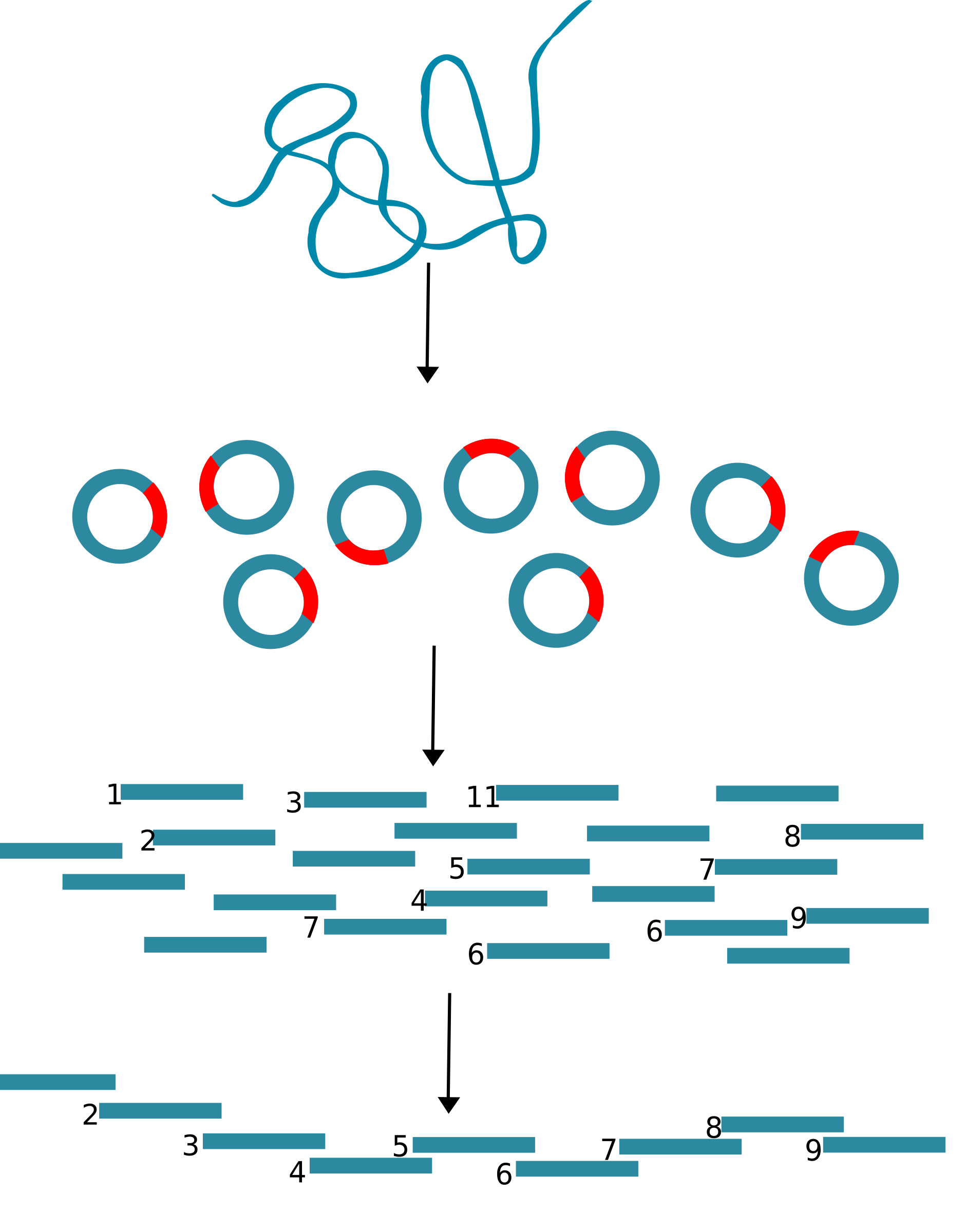 DNA cloning by JS