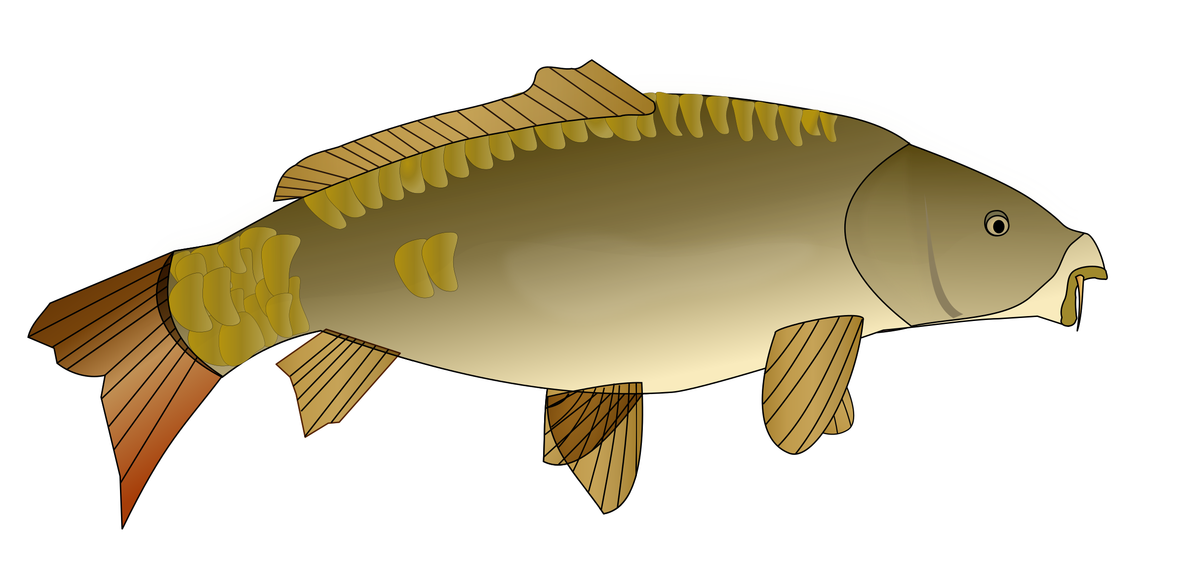 Carpe poisson by spadassin