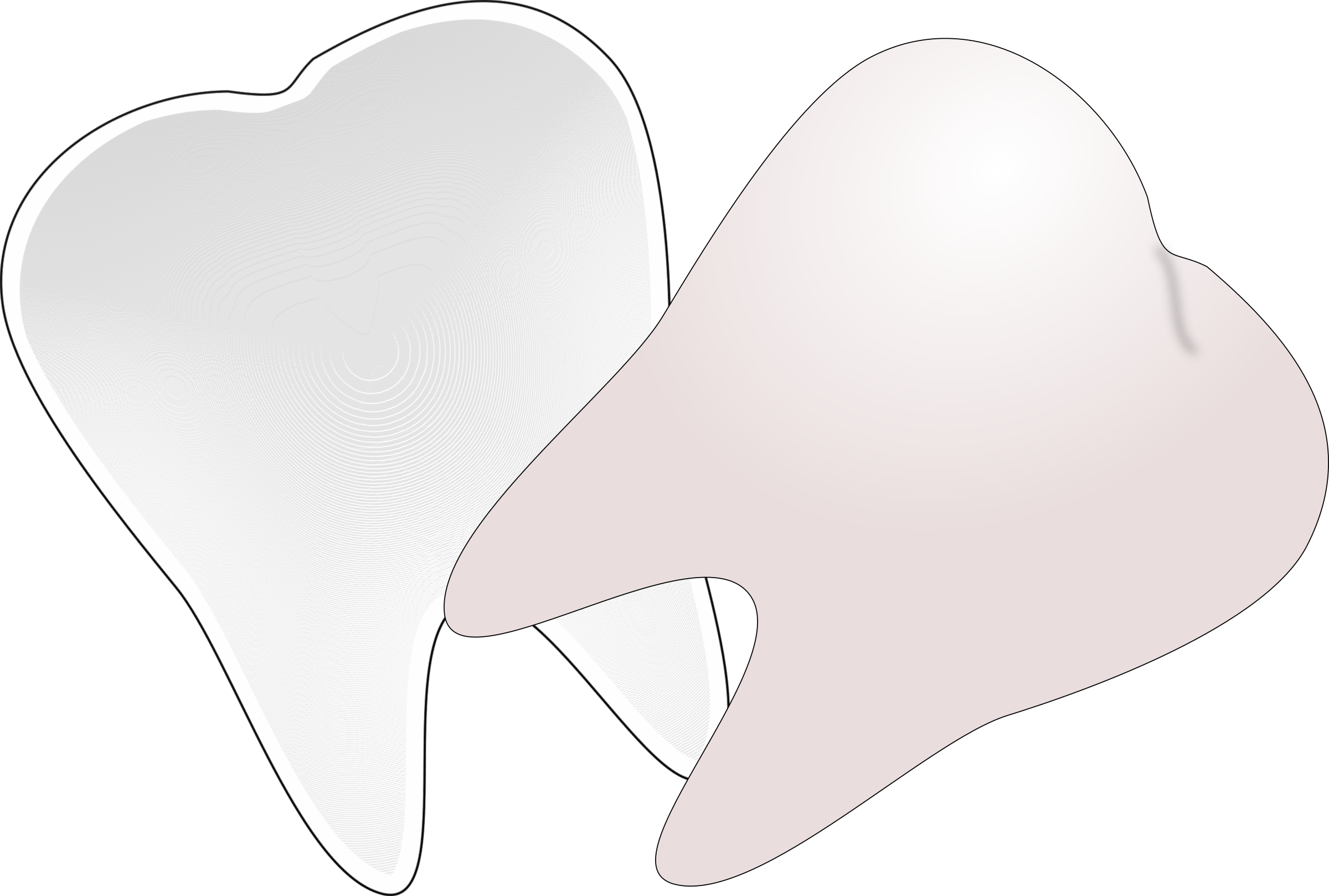 tooth cut in half by wsnaccad
