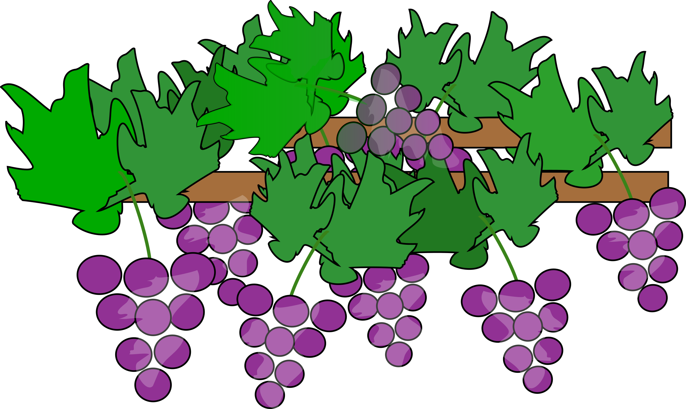 Grapes Growing for Wine by dinhochiz