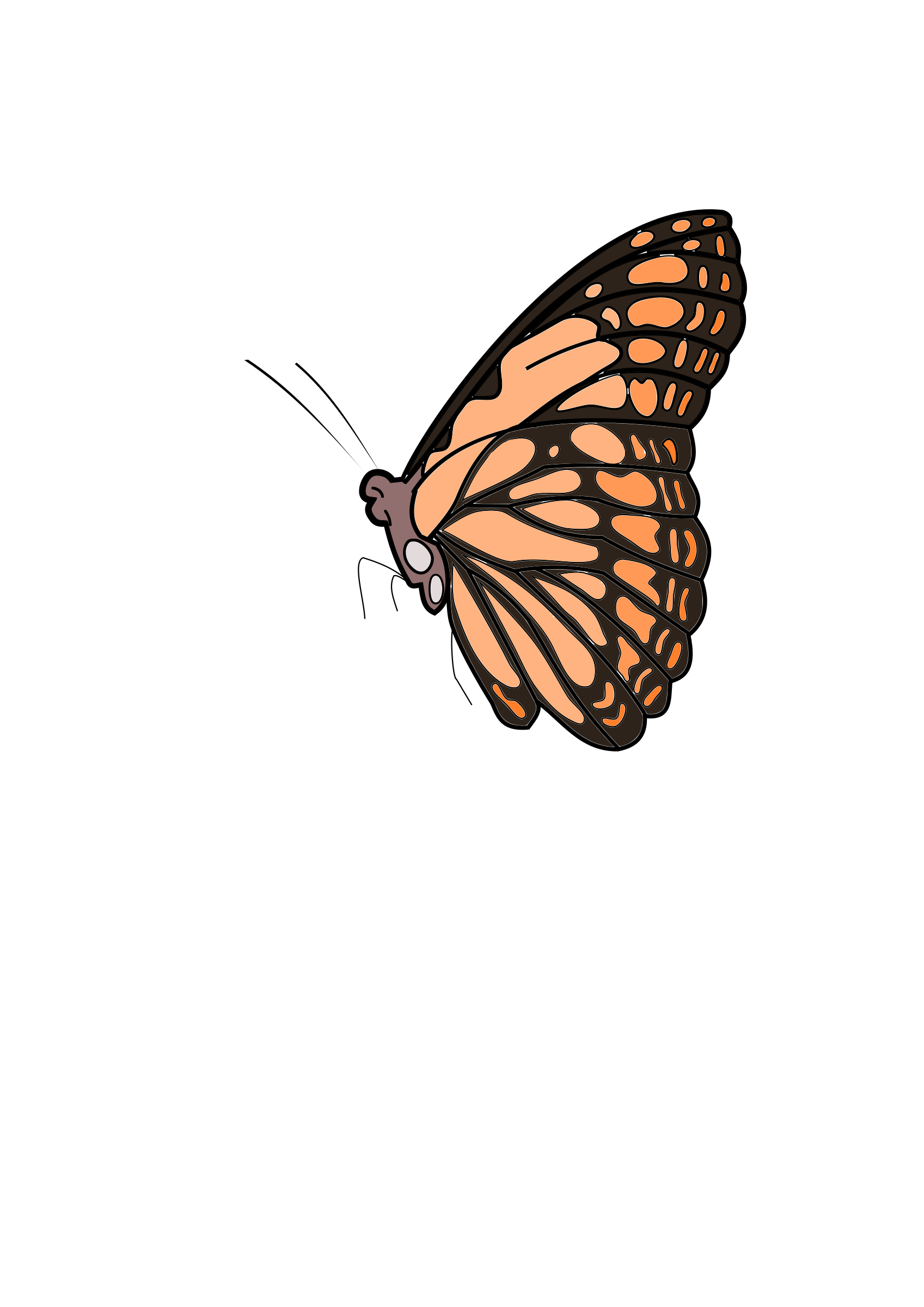Butterfly by Siddymcbill