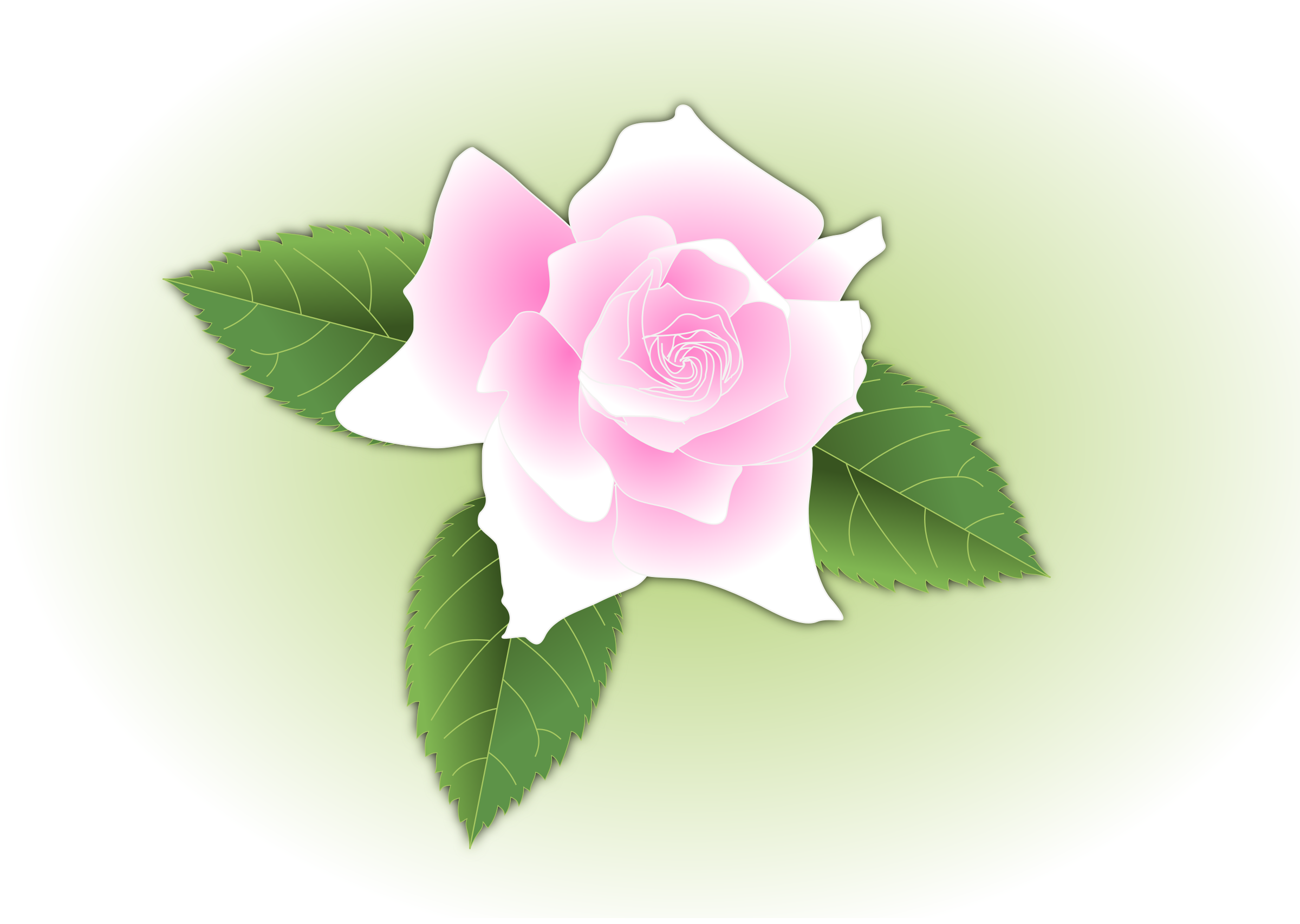 Pink rose - updated and fixed by Grafixgrrl