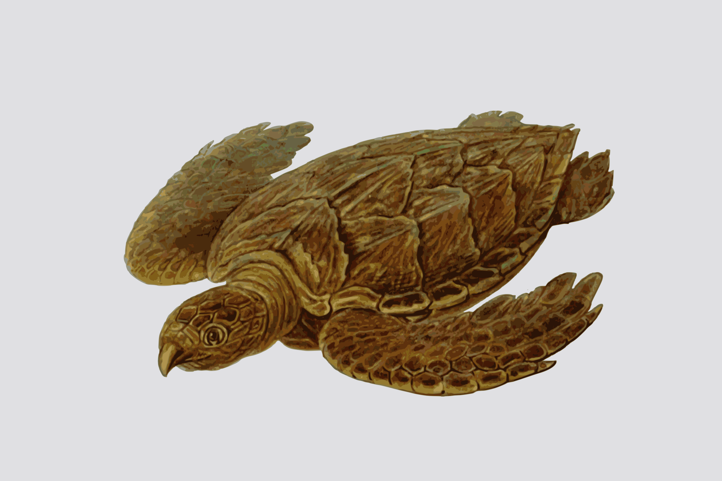 turtle by yamachem