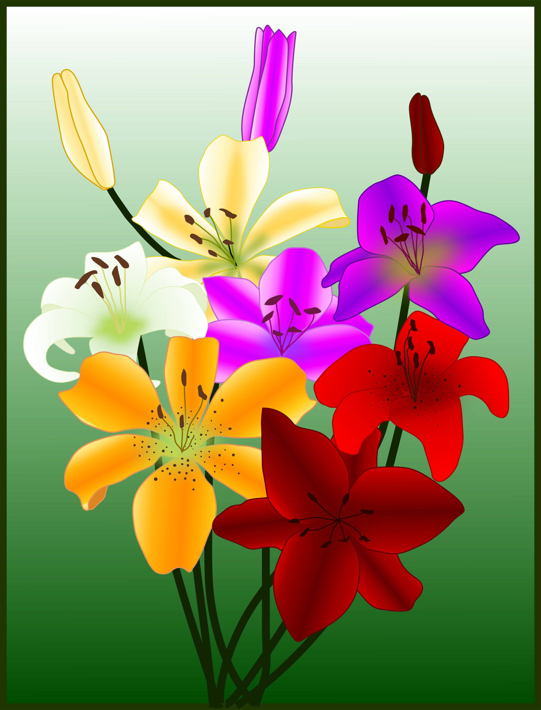 Flowers gigli lilies by SM-clipart
