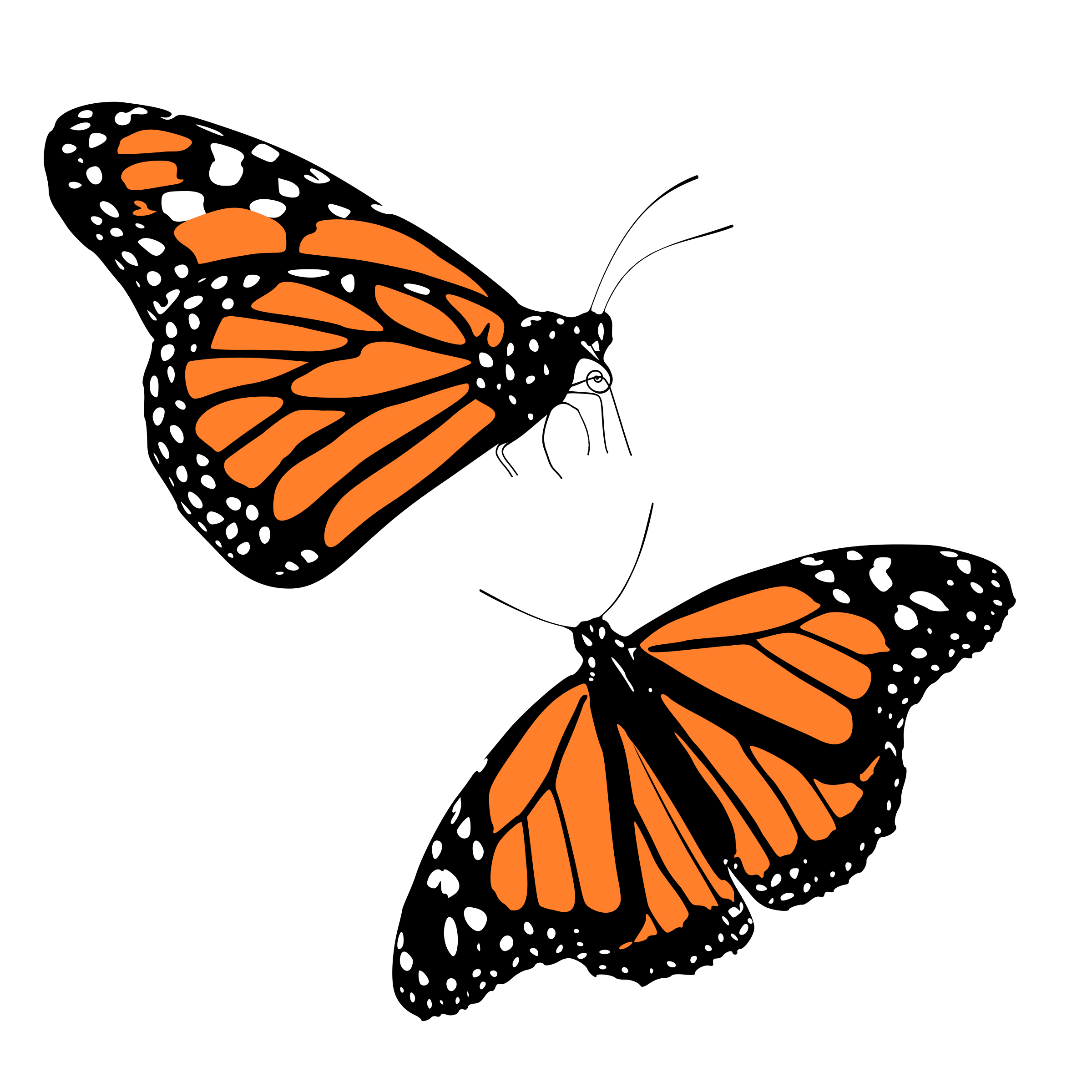 Monarch butterflies by franzi