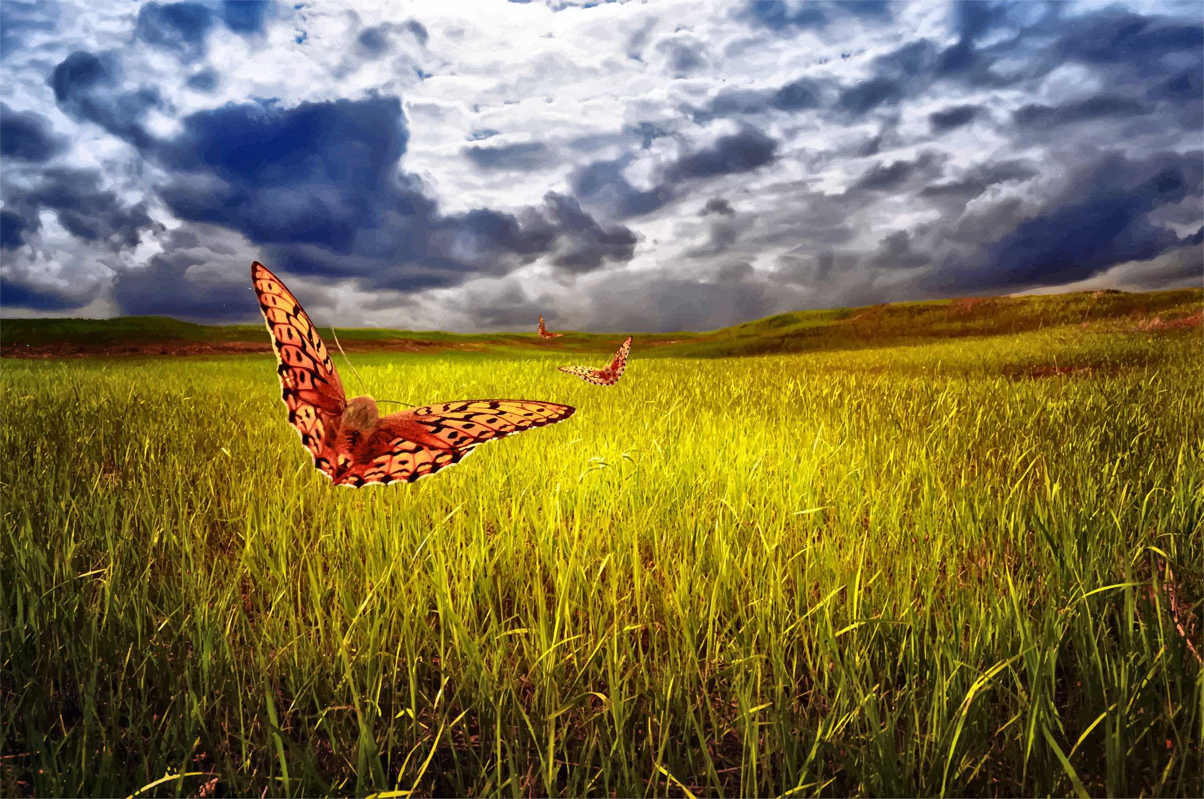 The Field, Sky And Butterflies by GDJ