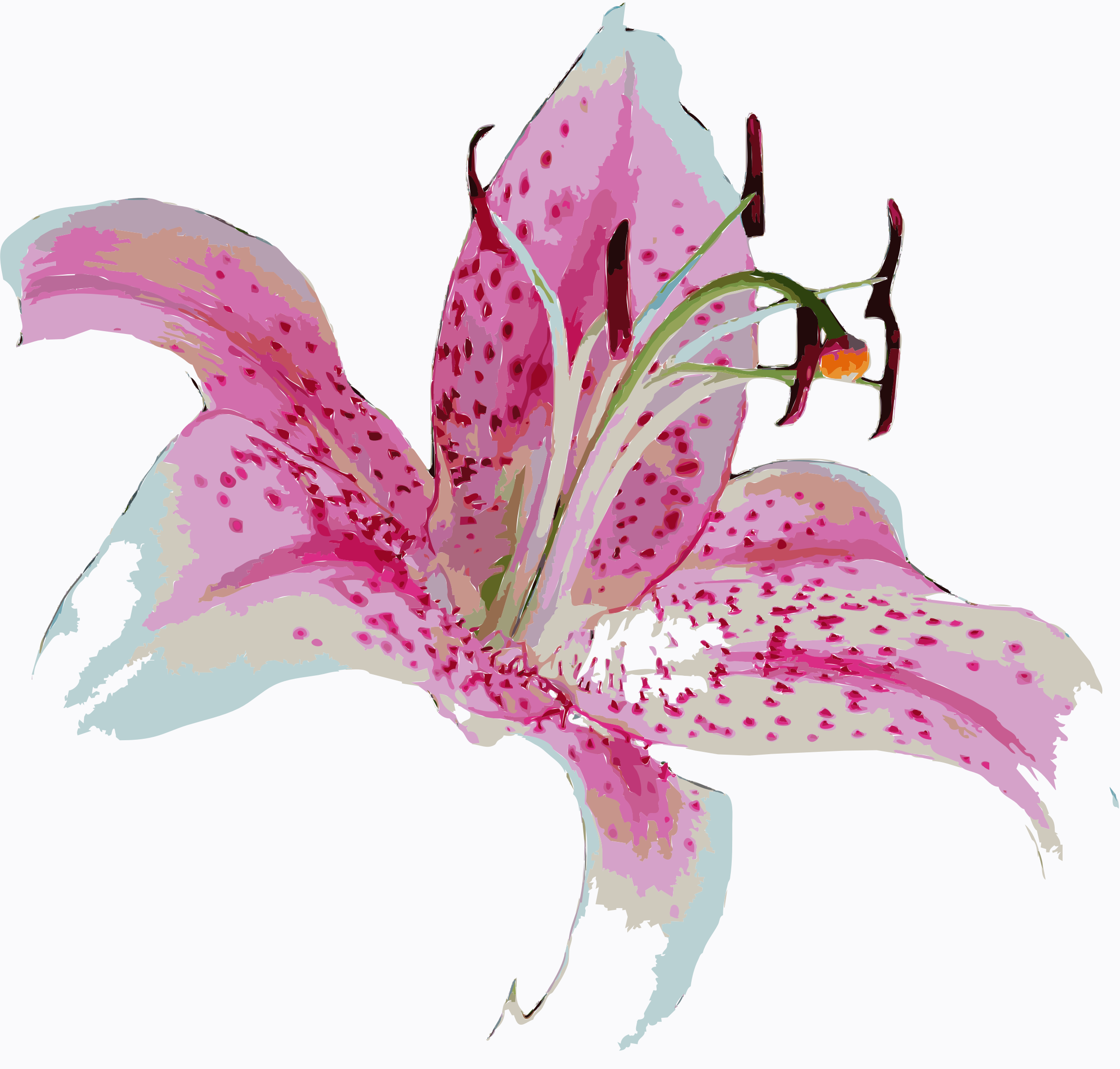 stargazer Lilly by elizagouveia