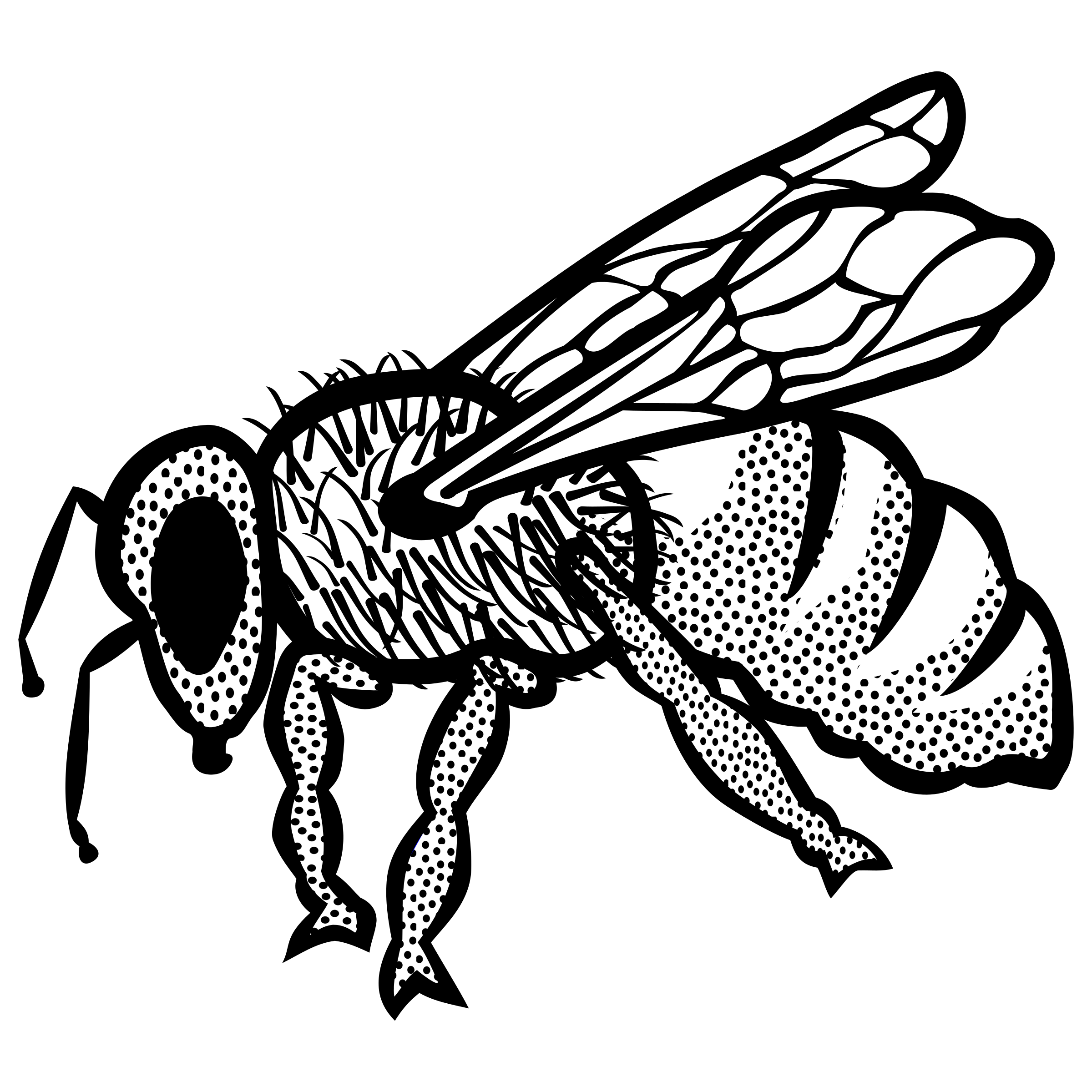 Bee (lineart) by frankes
